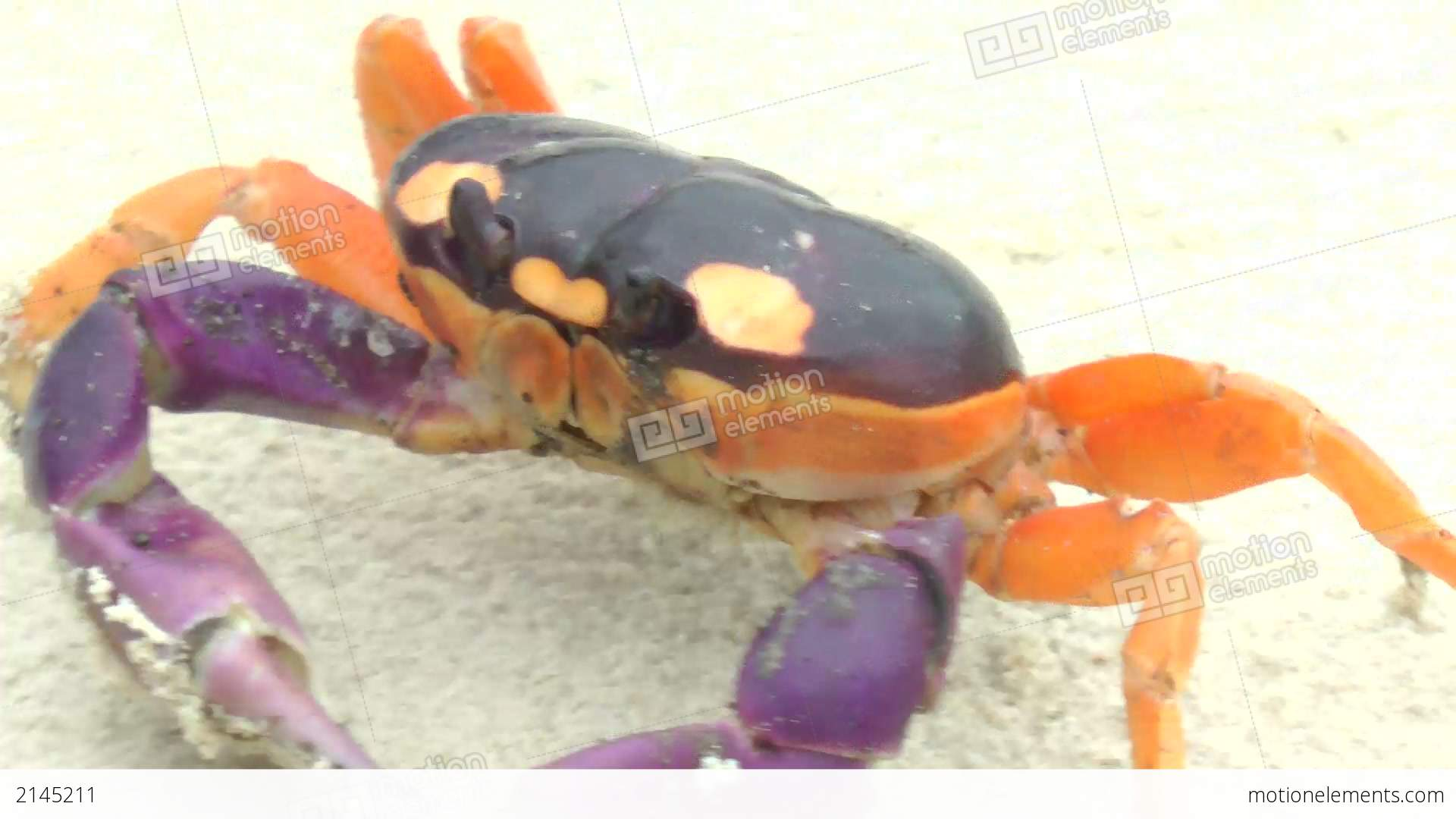 Halloween Crab Moving In The Sand Stock video footage | 2145211