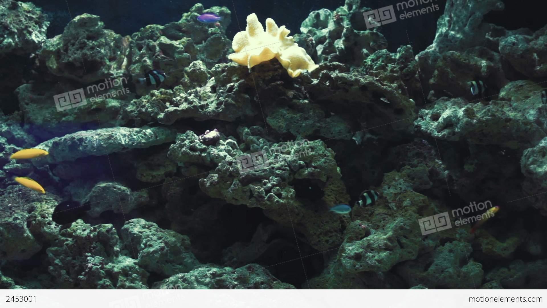 Artificial aquarium reef stock video footage 2453001 for Artificial fish tank