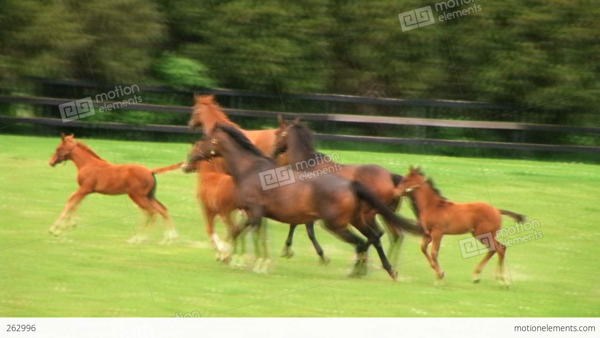 Horses Running Stock video footage | 262996 - photo#22