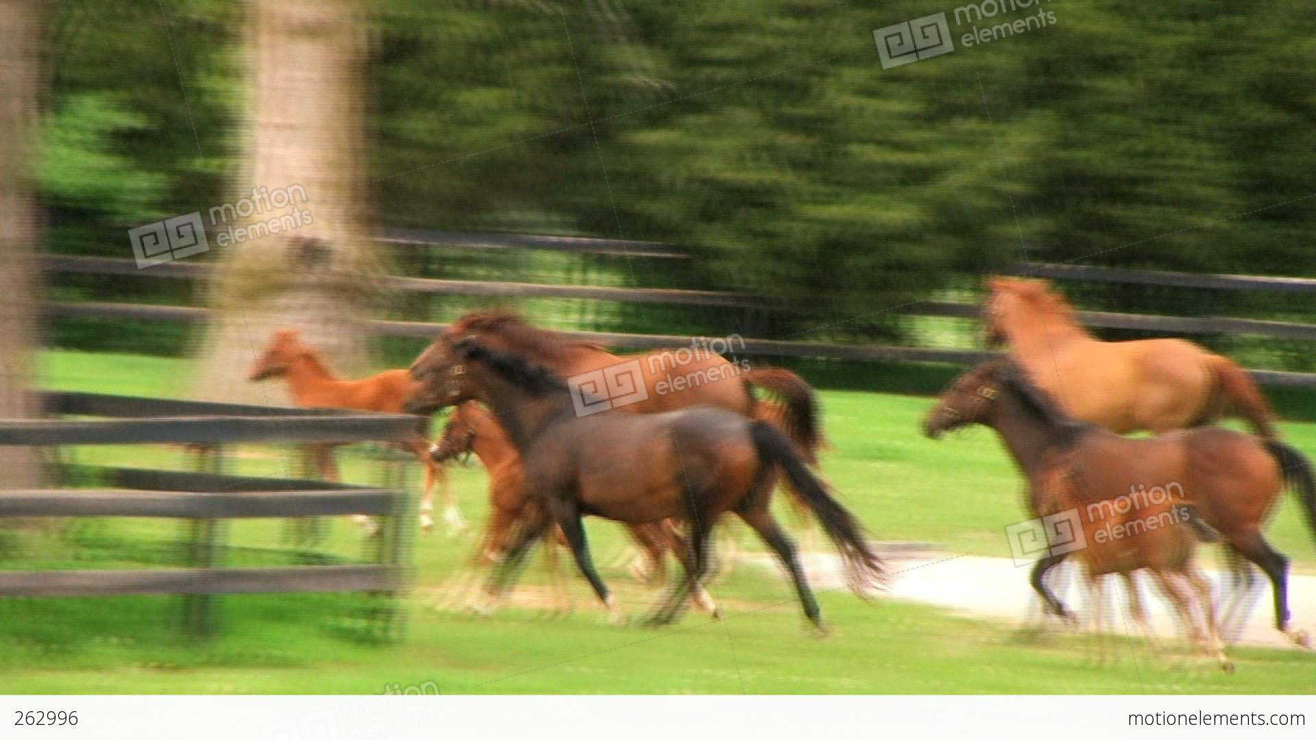 Horses Running Stock video footage | 262996 - photo#25