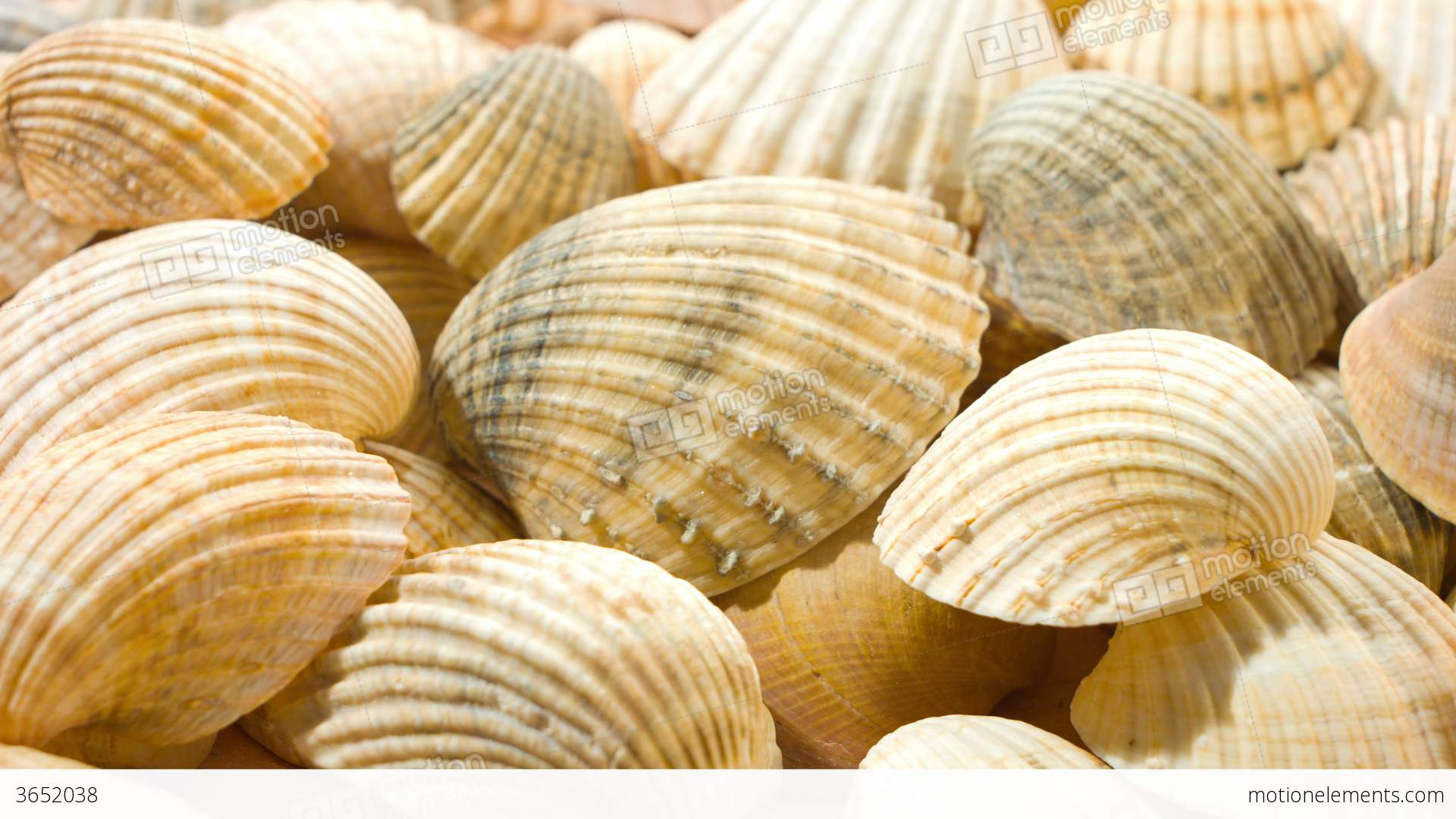Sea Shells Nature Background 4k Stock Video Footage 3652038