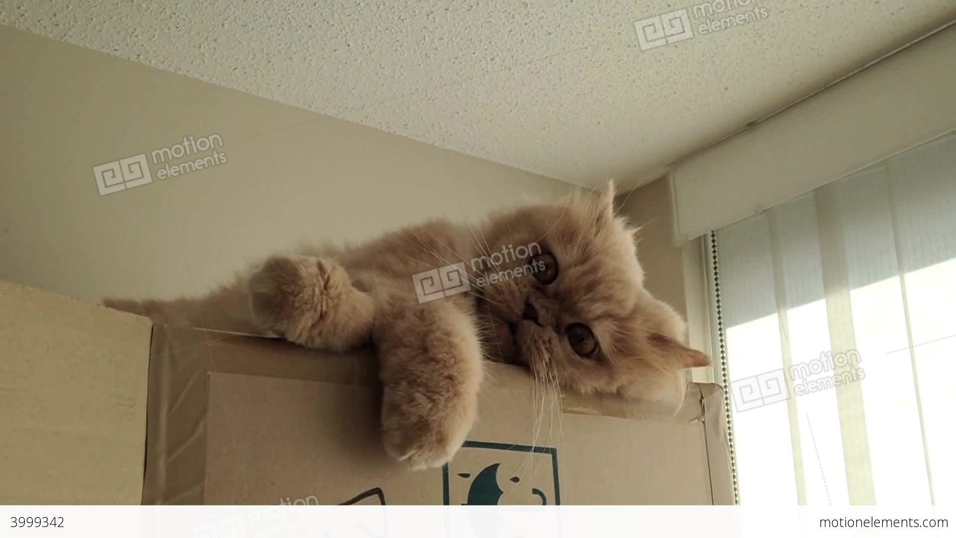 lonely cat behavior