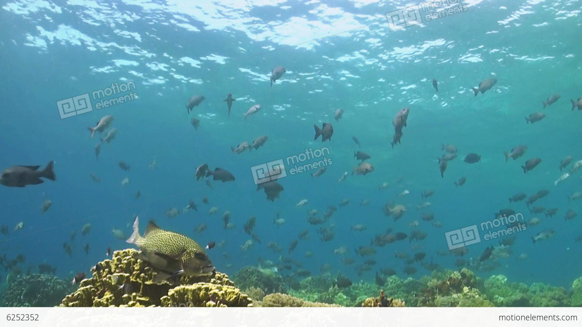 Coral reef with plenty of fish stock video footage 6252352 for Plenty of fish desktop