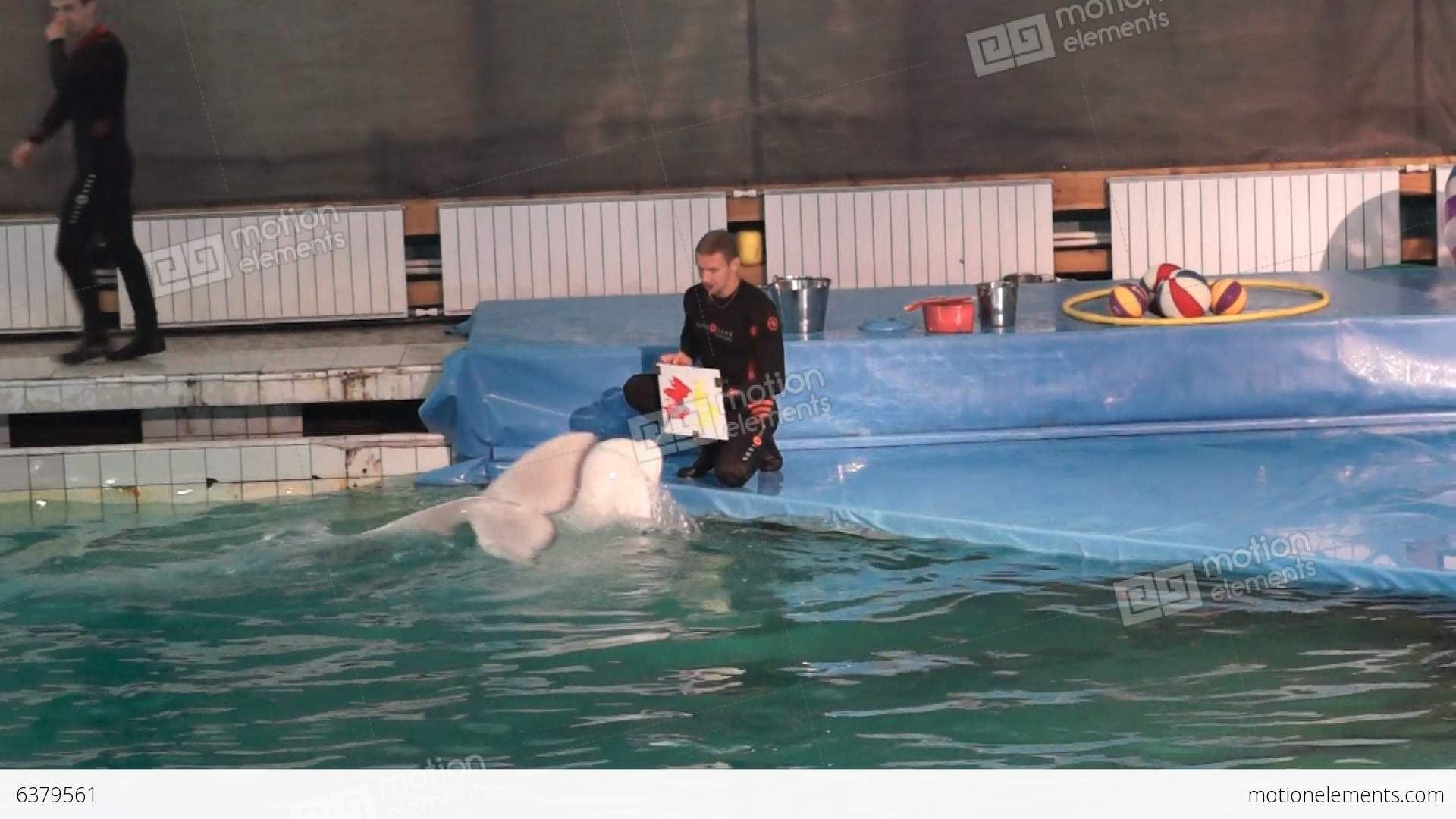 Dolphinarium in St. Petersburg: the sights of the northern capital 90
