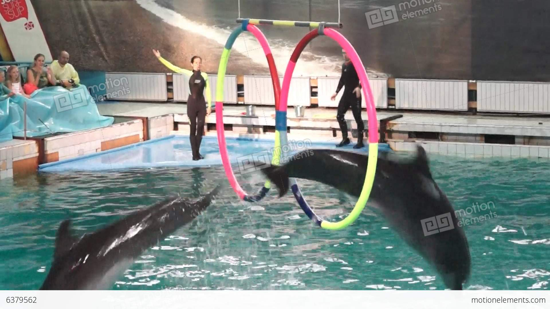 Dolphinarium in St. Petersburg: the sights of the northern capital 4