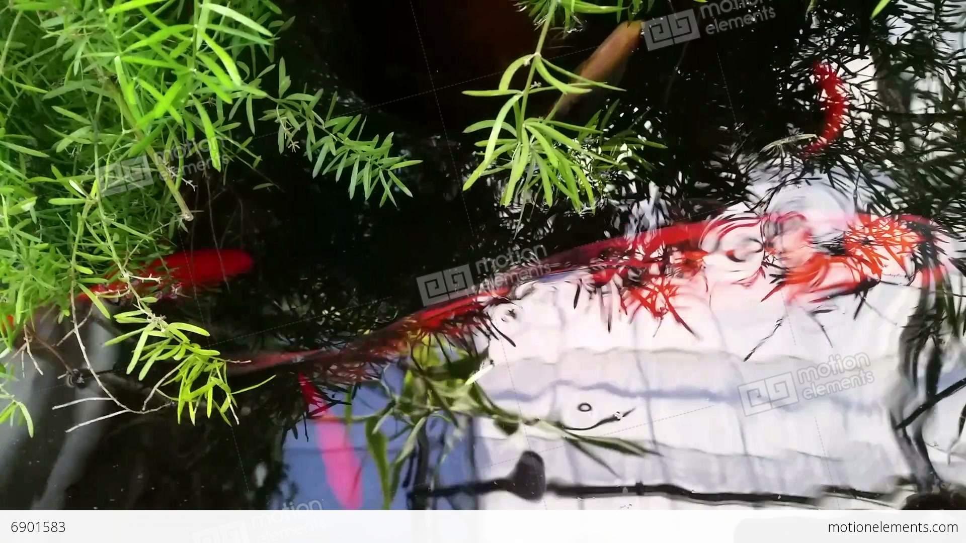 Koi pond stock video footage 6901583 for Koi fish pond hd