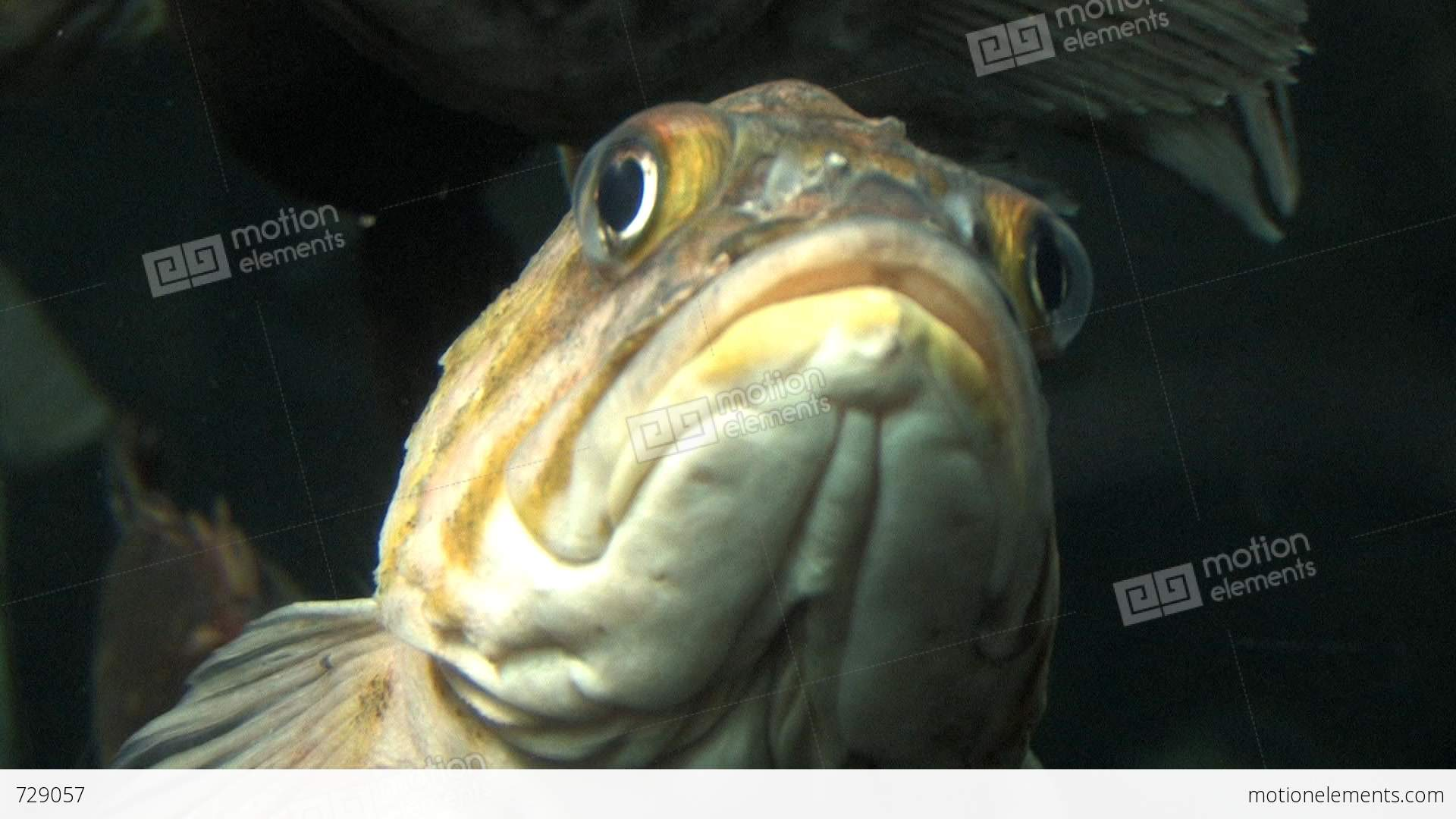 Fish that swims up the penis ist megageil
