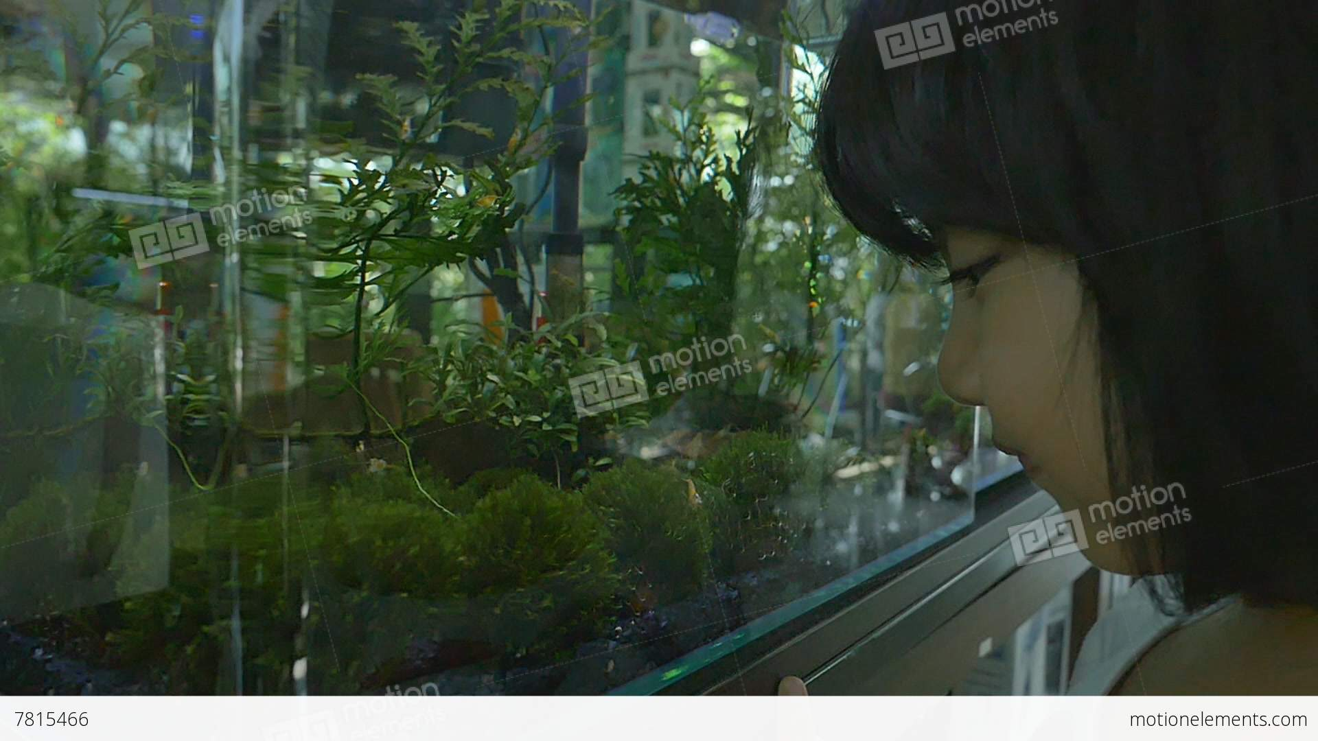 Fish for asian aquarium - Asian Girl Looks At Fish Swimming In Aquarium Stock Video Footage