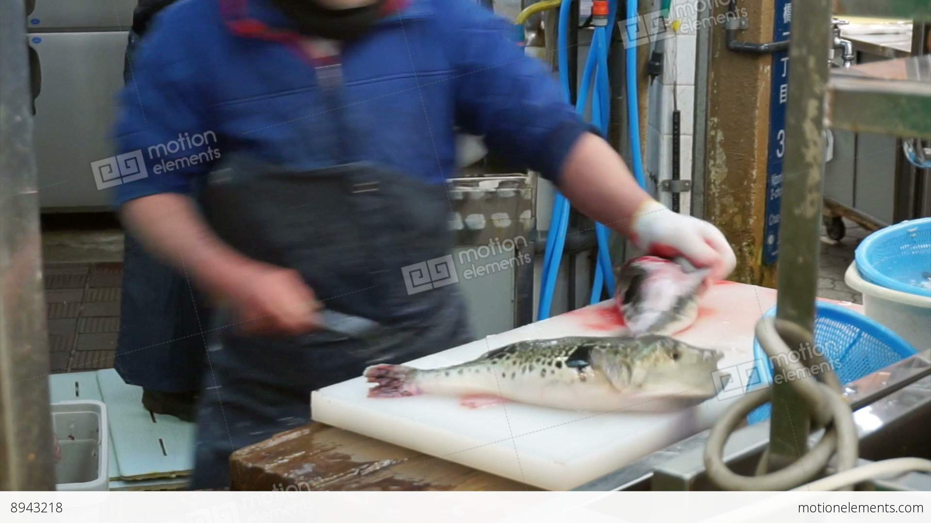 Fugu pufferfish porcupine fish sashimi chef preparation for Puffer fish price