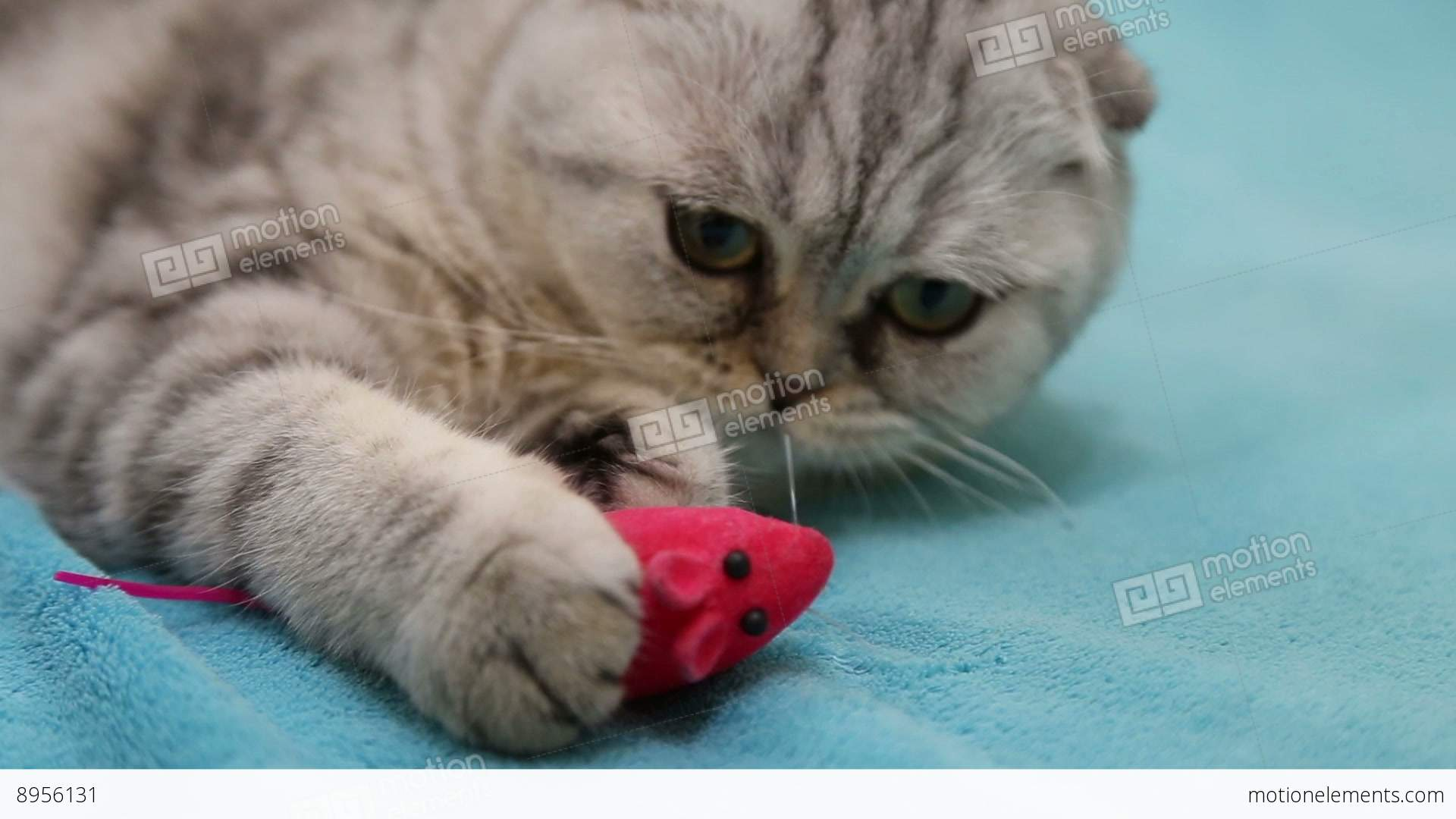 Cat playing with toy mouse Stock Video Footage