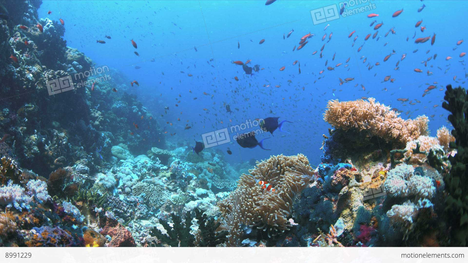 Coral reef with plenty fish 4k stock video footage 8991229 for Plenty of fish desktop