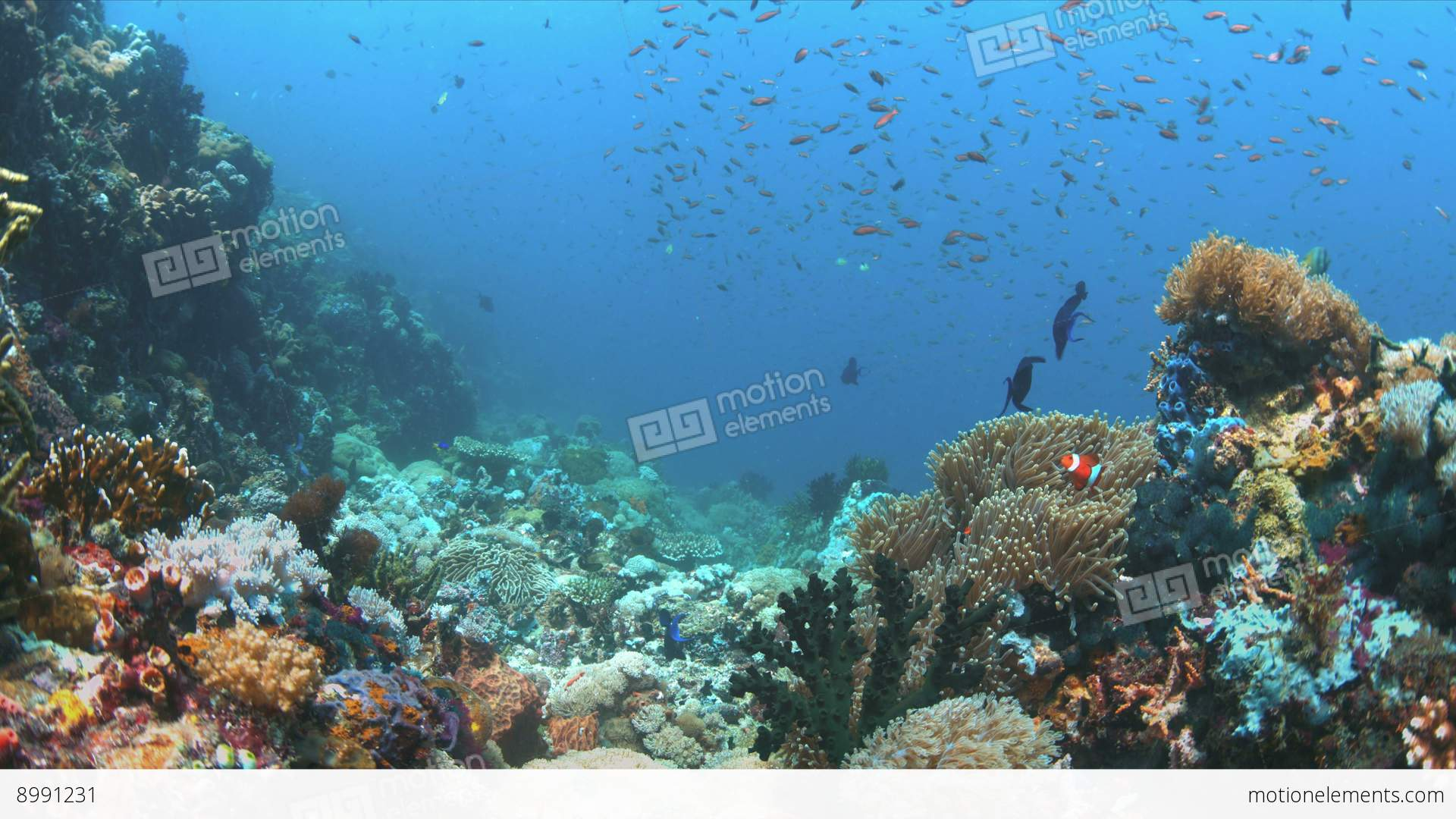 Coral reef with plenty fish 4k stock video footage 8991231 for Plenty of fish desktop