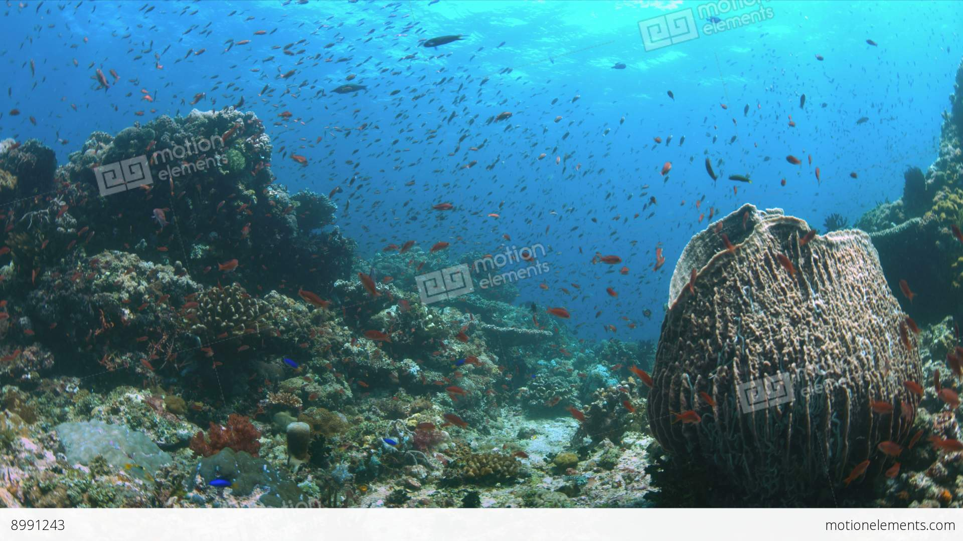 Coral reef with plenty fish 4k stock video footage 8991243 for Plenty of fish desktop