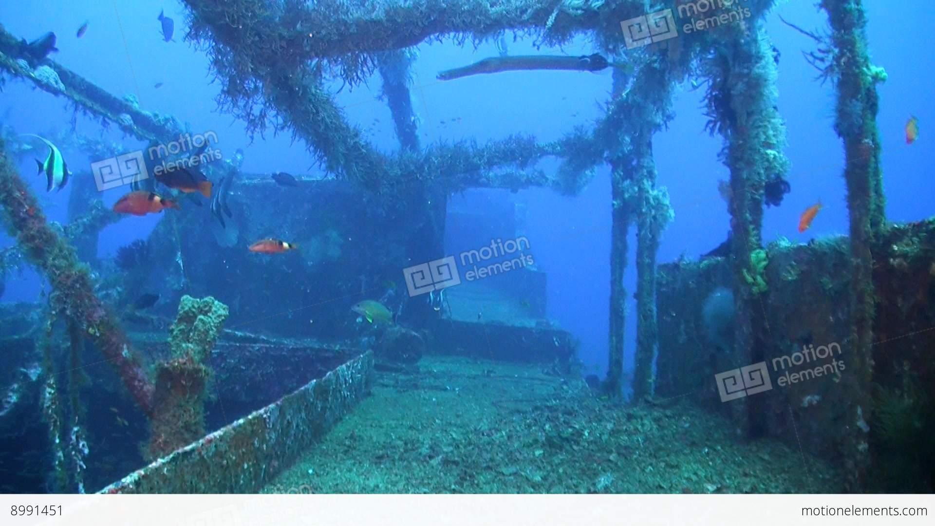 Wreck with plenty fish stock video footage 8991451 for Plenty of fish desktop