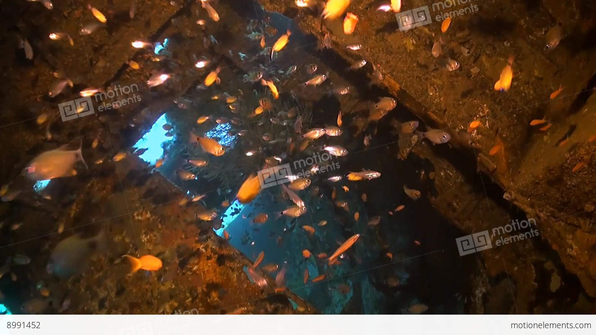 Wreck with plenty fish stock video footage 8991452 for Plenty of fish desktop