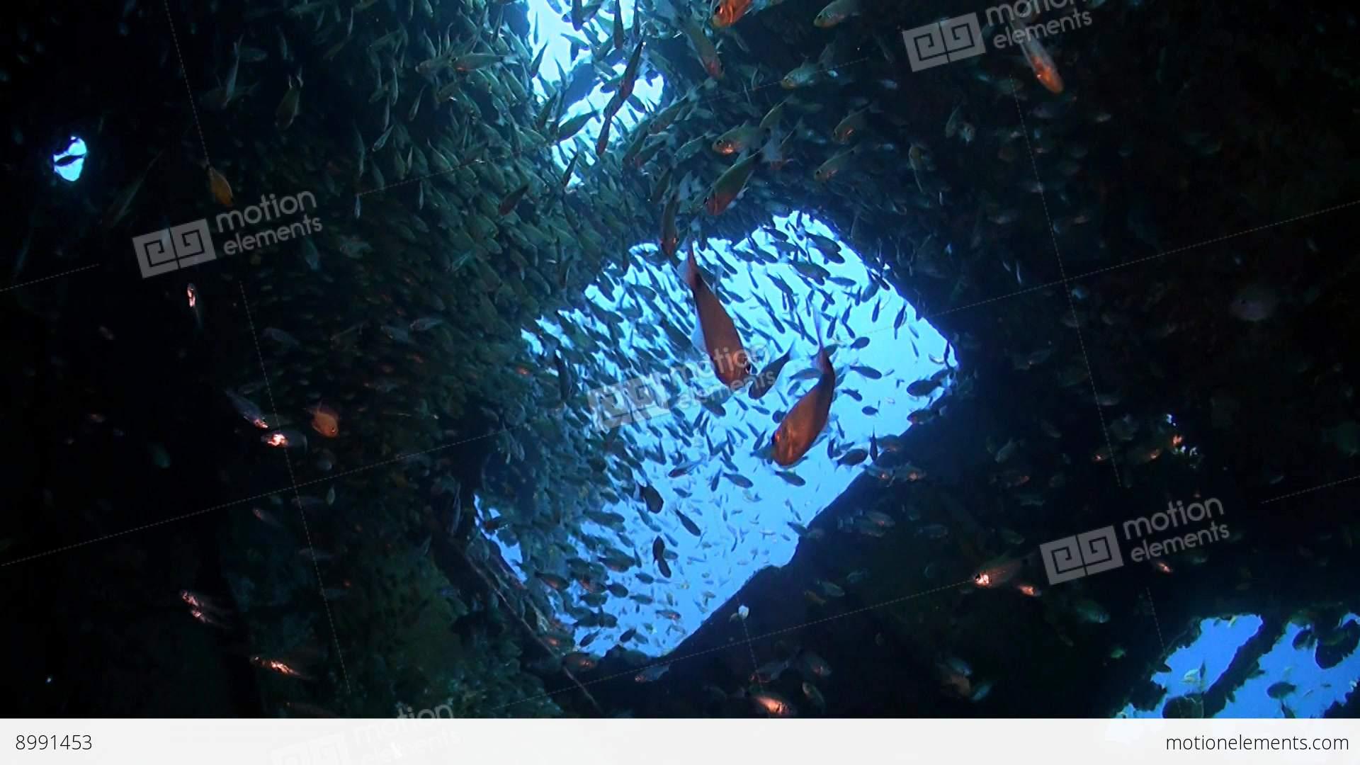 Wreck with plenty fish stock video footage 8991453 for Plenty of fish desktop