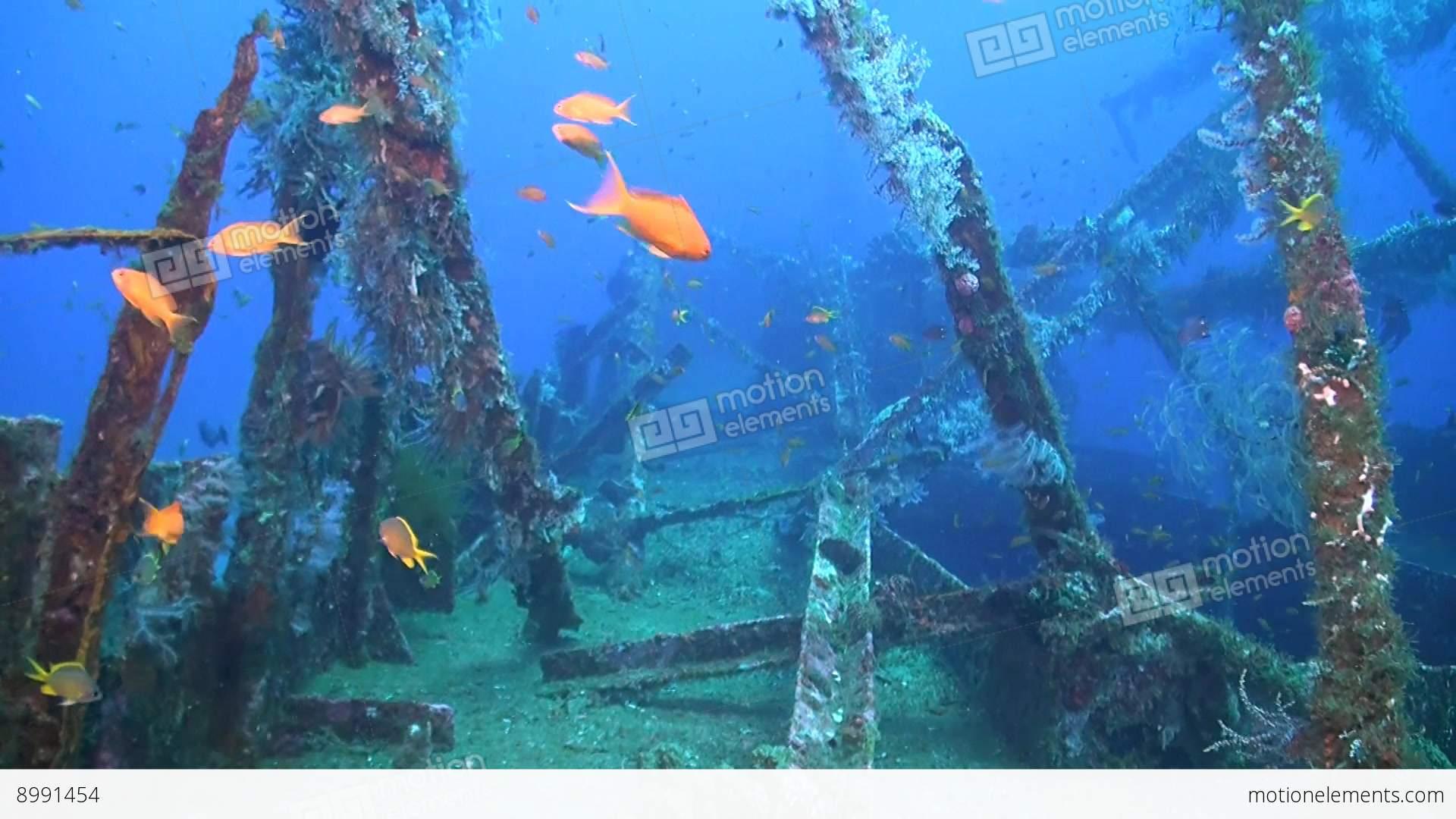 Wreck with plenty fish lizenzfreie videos 8991454 for Plenty of fish desktop