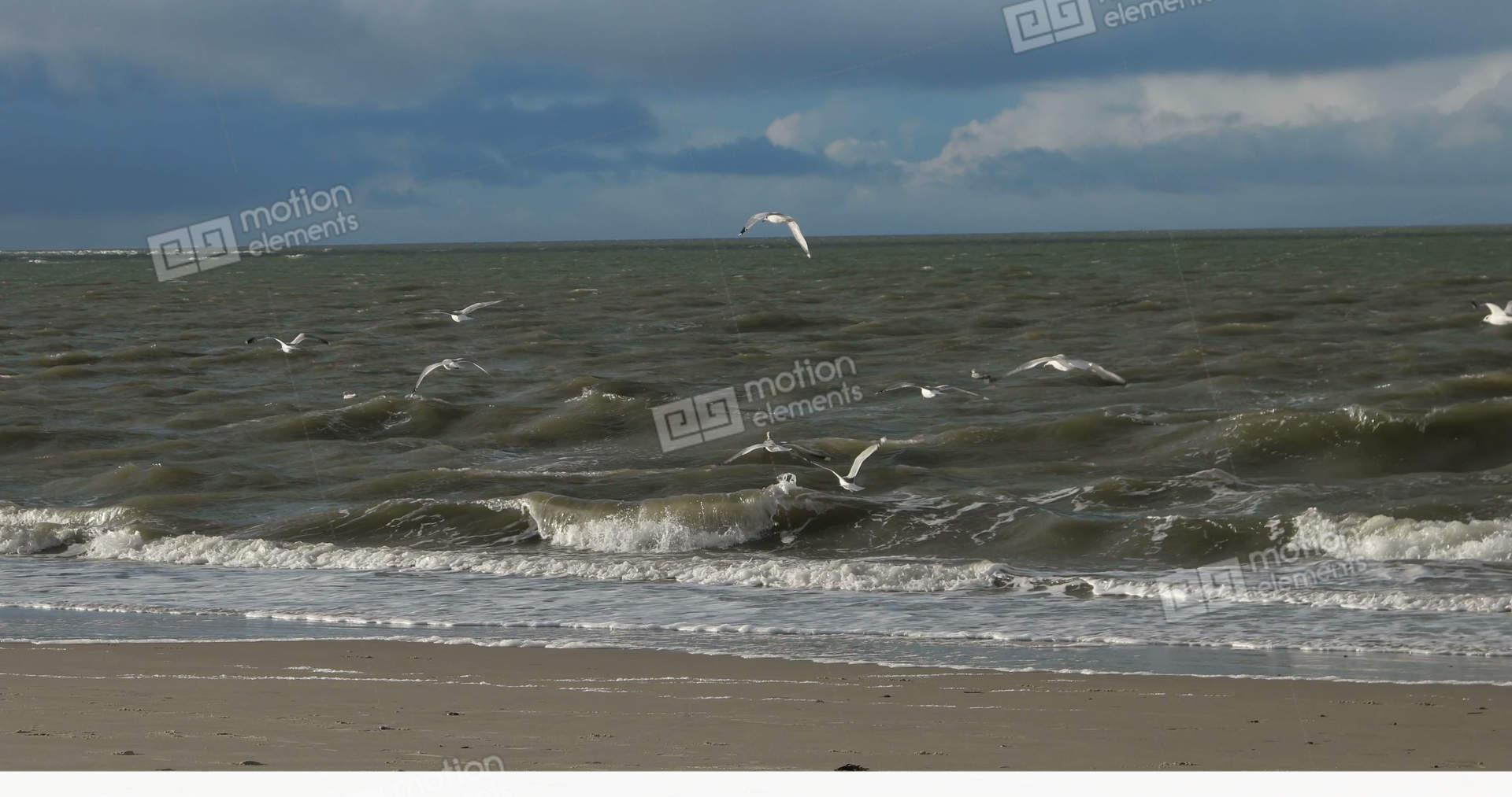 Industrial House Birds On North Frisian Island Beach Of Amrum In Germany