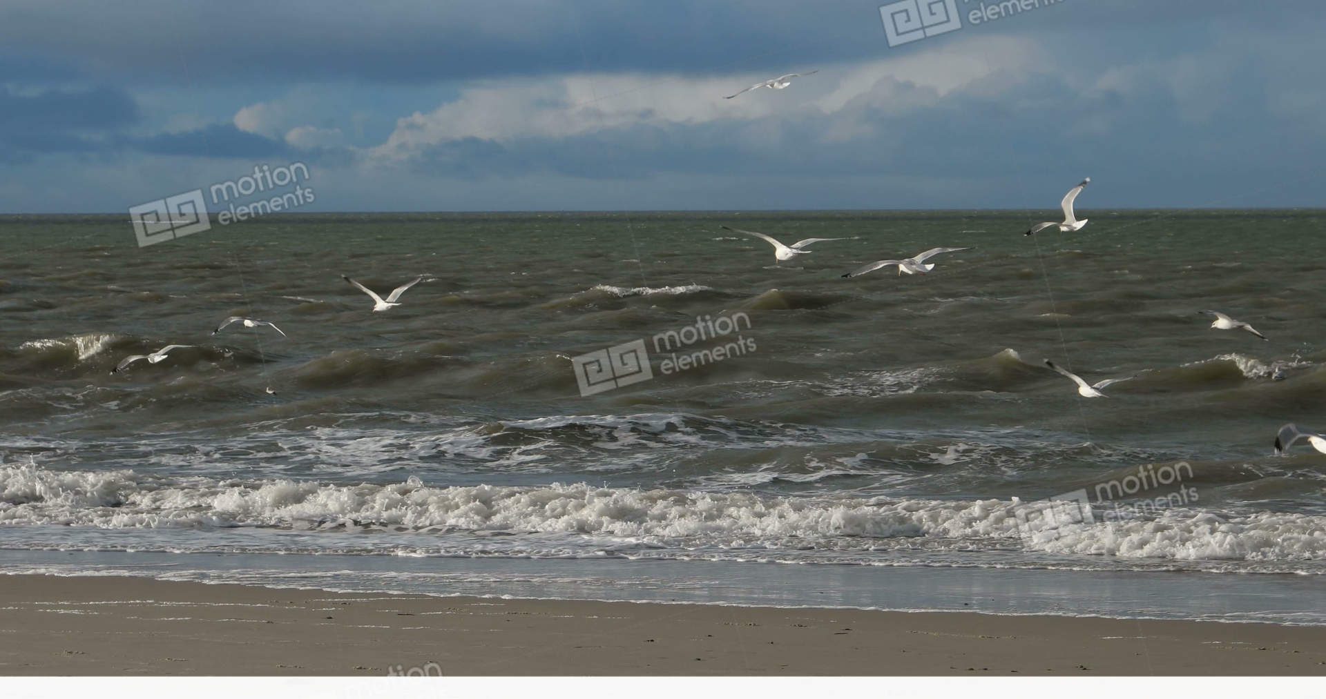 birds on north frisian island beach of amrum in germany clip art for sports park clip art for sports physical