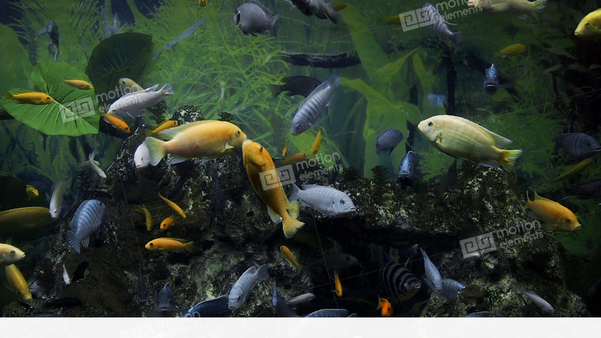 Colorful Fishes Swim In The Large Aquarium, Freshwater Fishes ...