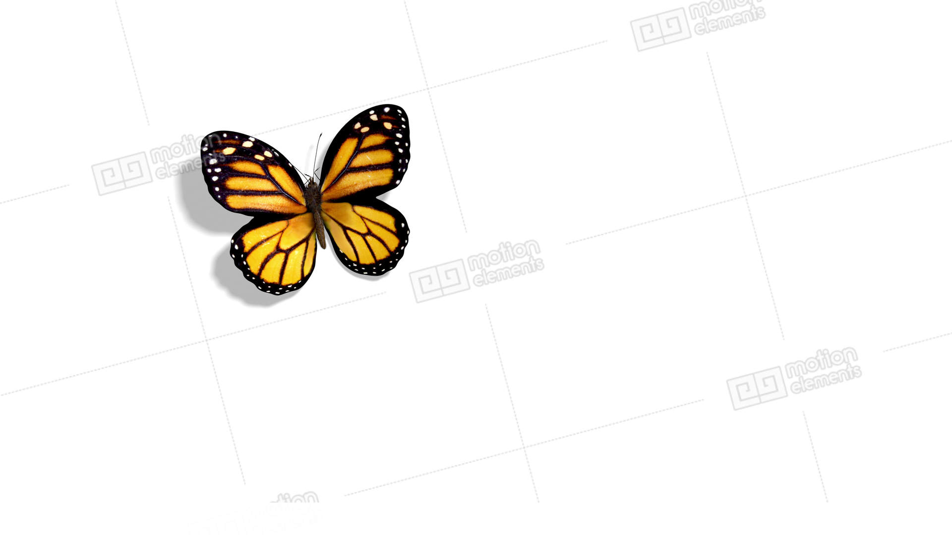 Images of Animated Orange Butterflies - #rock-cafe