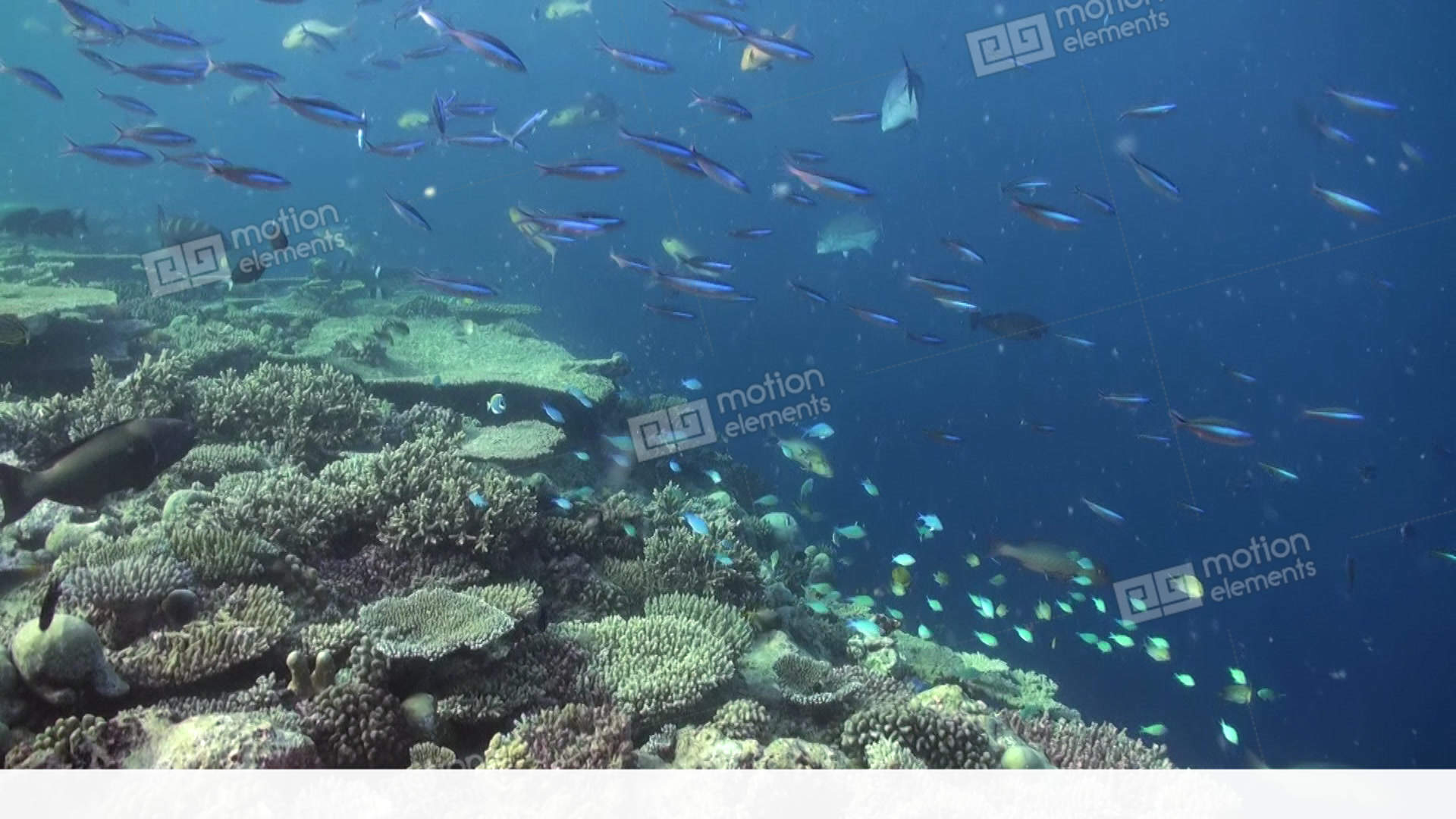 Underwater Landscape Of Coral Reef. Maldives Stock video ...
