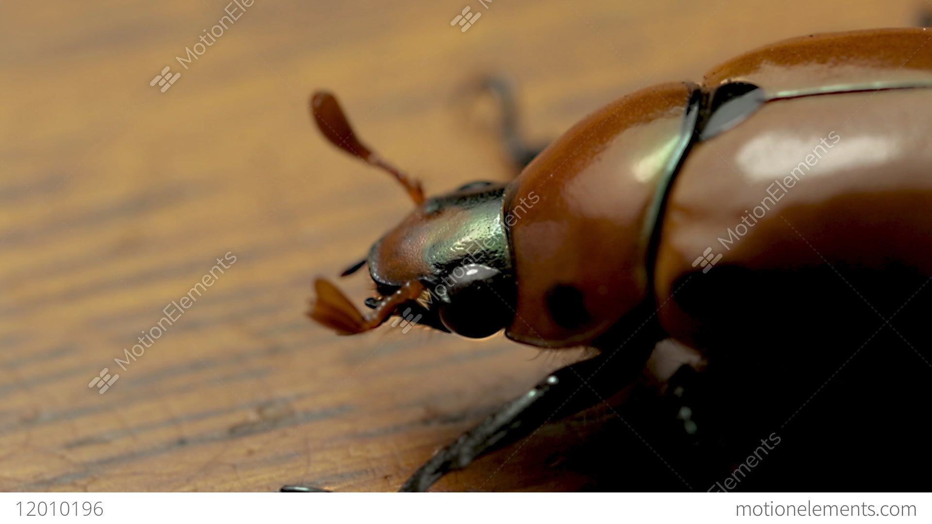 June Beetle: Pest, after whom the cocktail was named 38