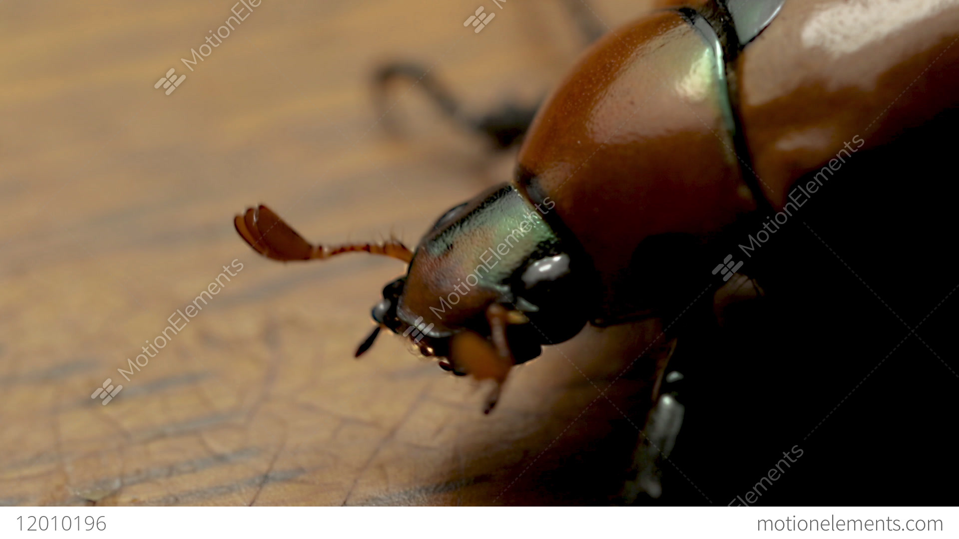 June Beetle: Pest, after whom the cocktail was named 73