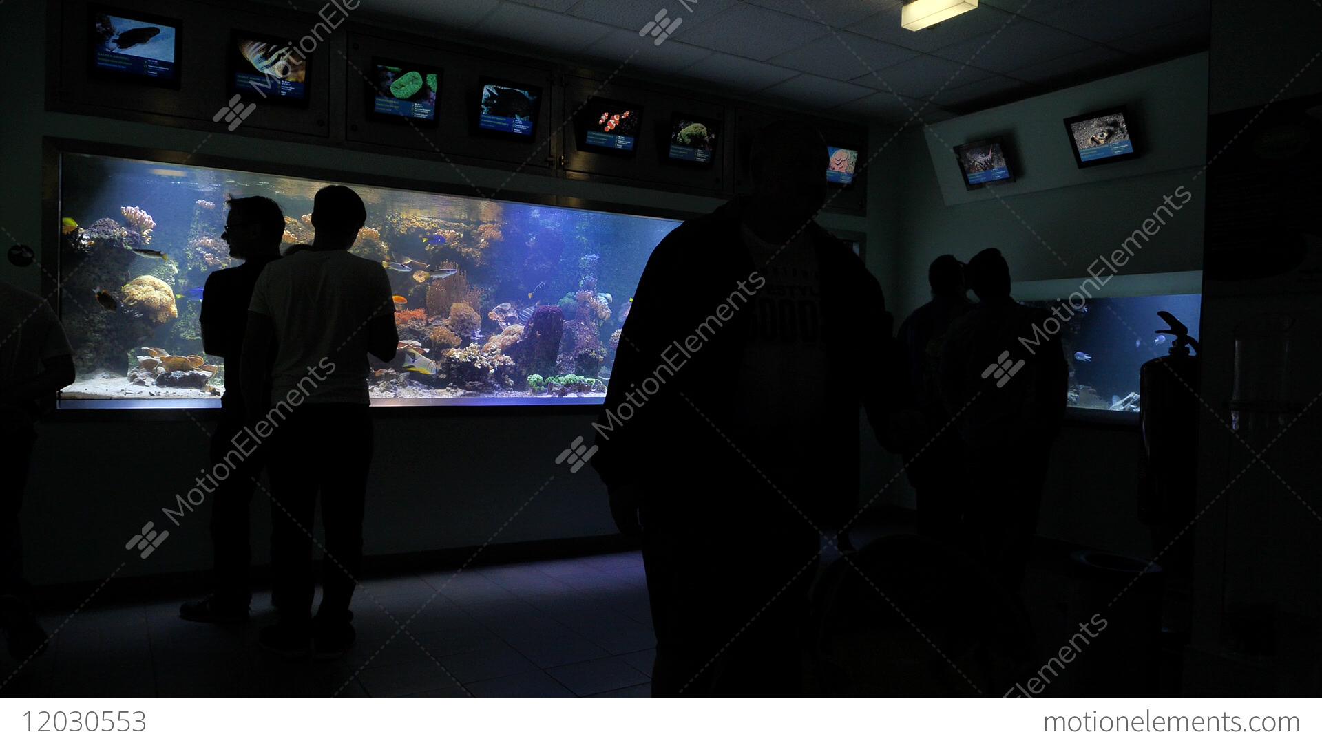 Amazing Breathtaking Aquarium Terra Zoo Haus Des Meeres In Vienna ...