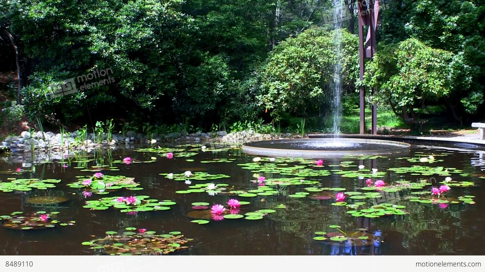 Flume Fountain Waterfall Lands In Oval Pool Of Lotus Flowers At