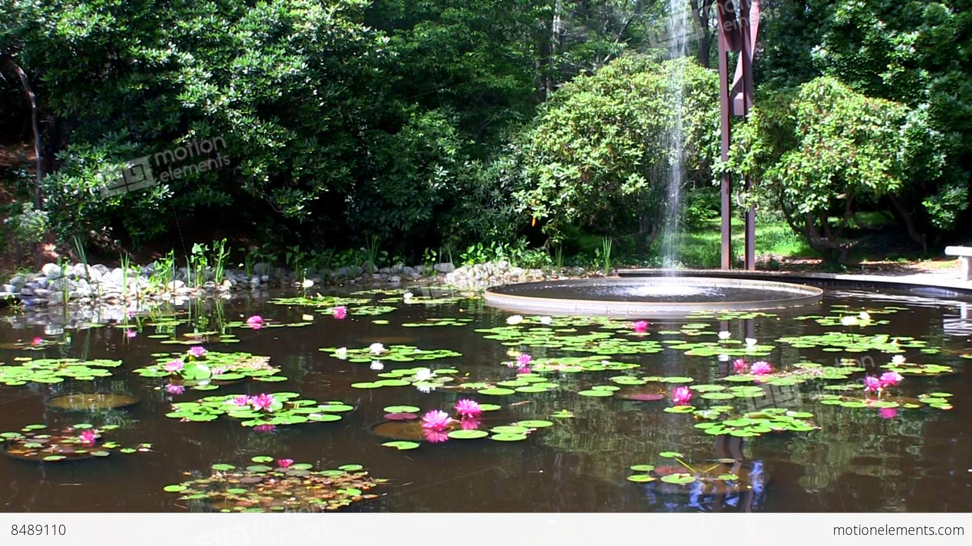 Flume fountain waterfall lands in oval pool of lotus flowers at flume fountain waterfall lands in oval pool of lotus stock video footage izmirmasajfo