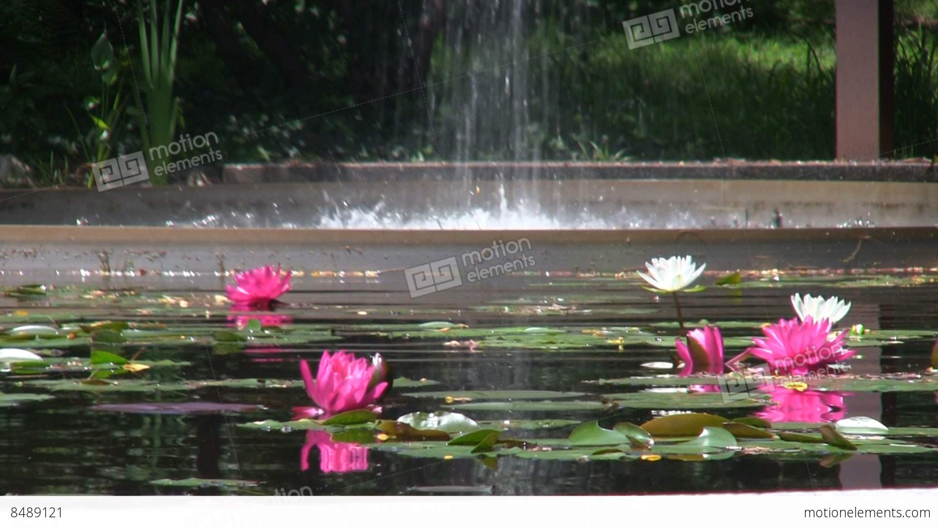 Flume fountain waterfall lands in oval pool of lotus flowers at flume fountain waterfall lands in oval pool of lotus stock video footage dhlflorist Images