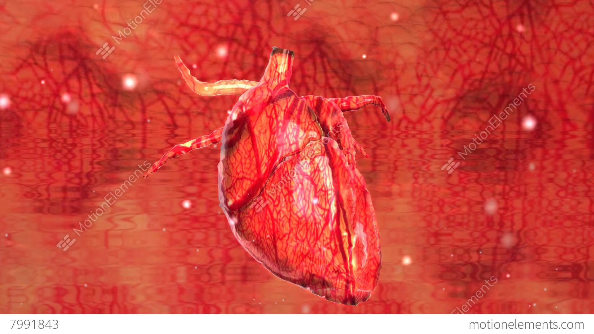 Human Heart Cardiovasculer Speed Up Beating Animation Stock video ...