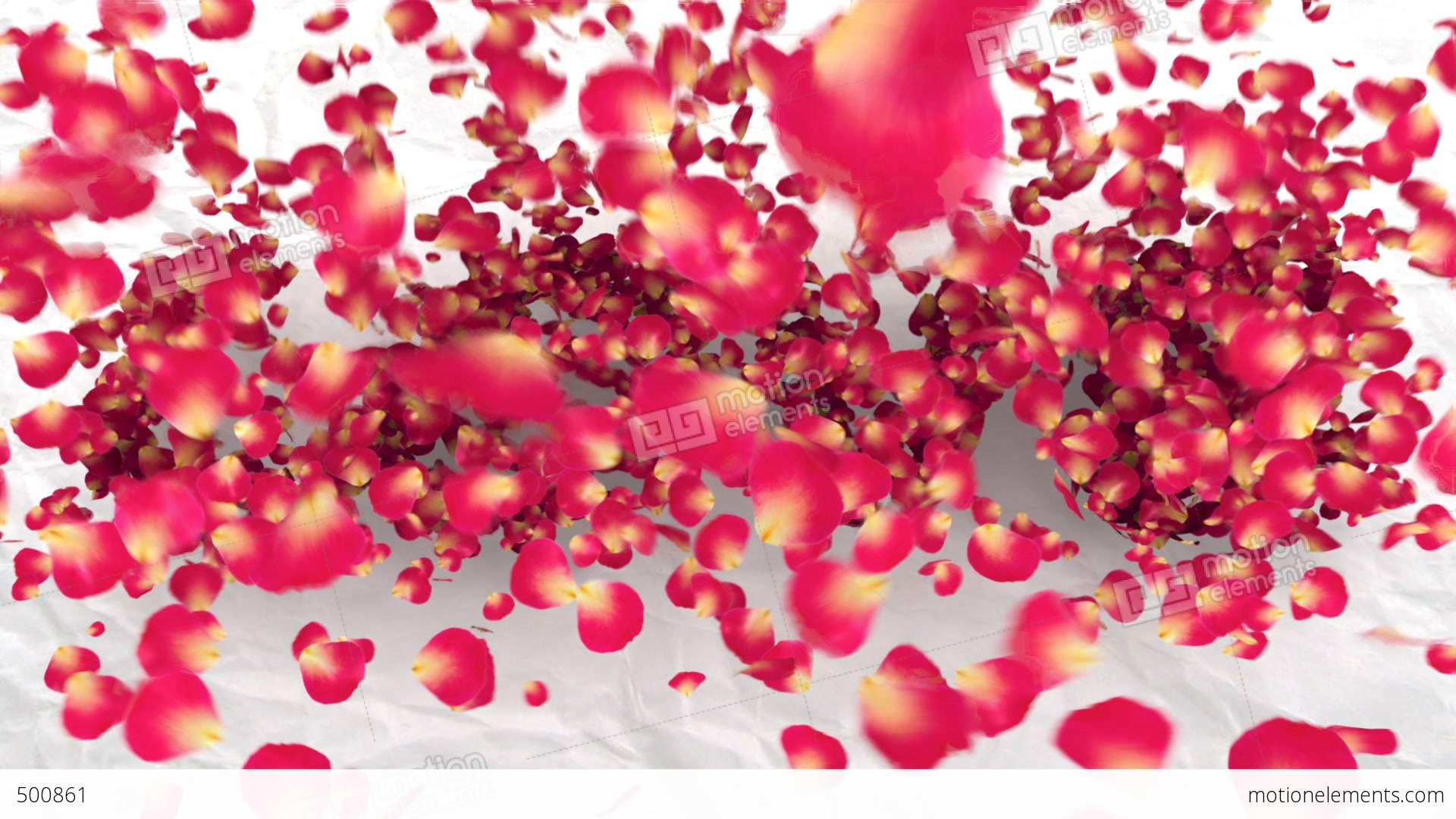 love flower stock animation 500861