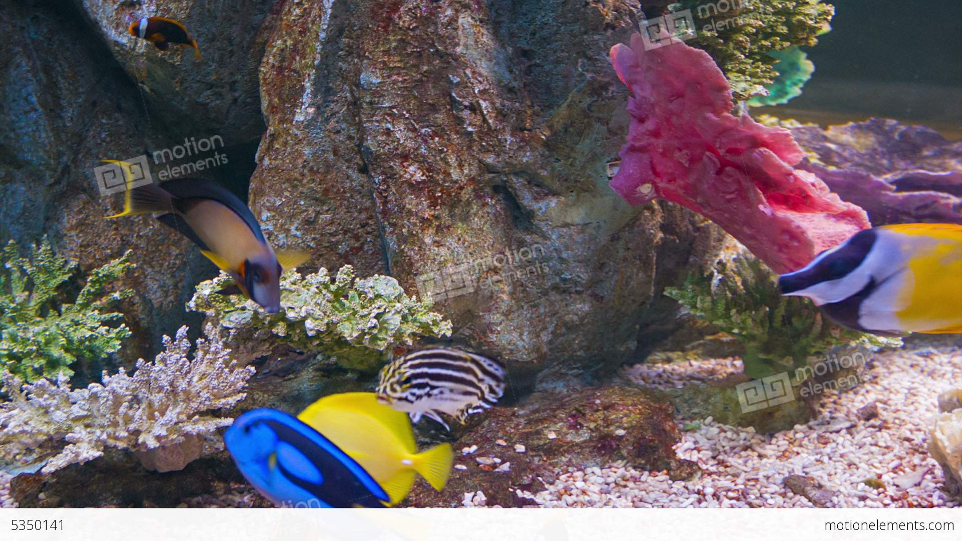 Colorful Tropical Fish In Aquarium Stock video footage ...