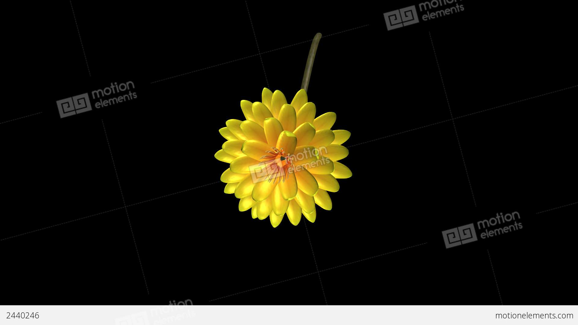 Yellow Lotus Flower Rotating Particle Stock Animation 2440246