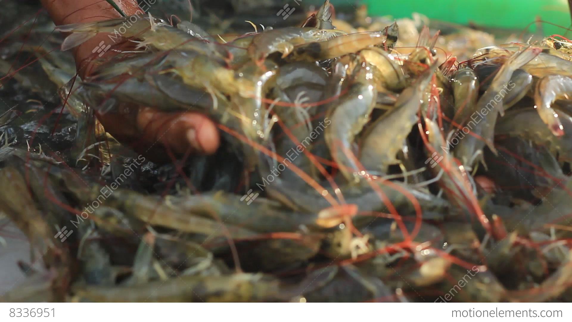 Eco-friendly shrimp farming