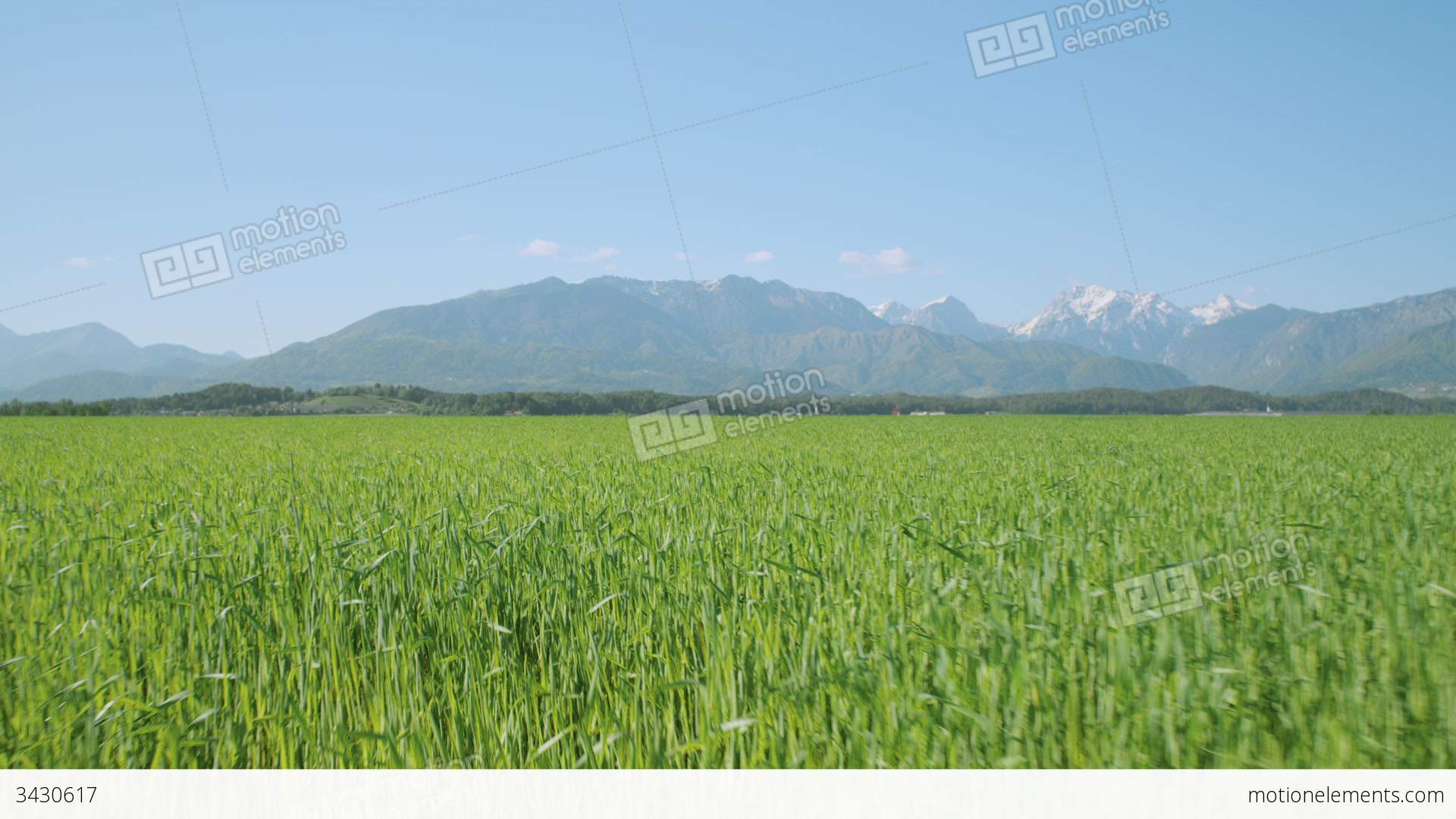 Green Wheat Field Spring HD desktop wallpaper : High Definition