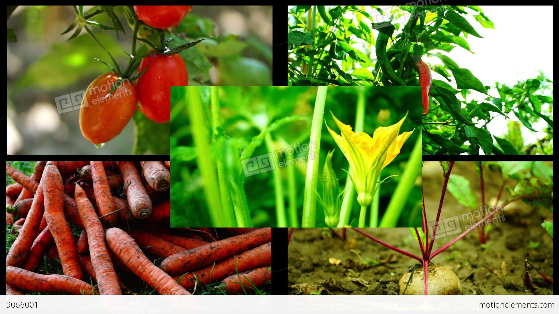 organic farming concept 6 i organic food and farming - a system approach to meet the sustainability  challenge introduction to the concepts and principles of  organic.