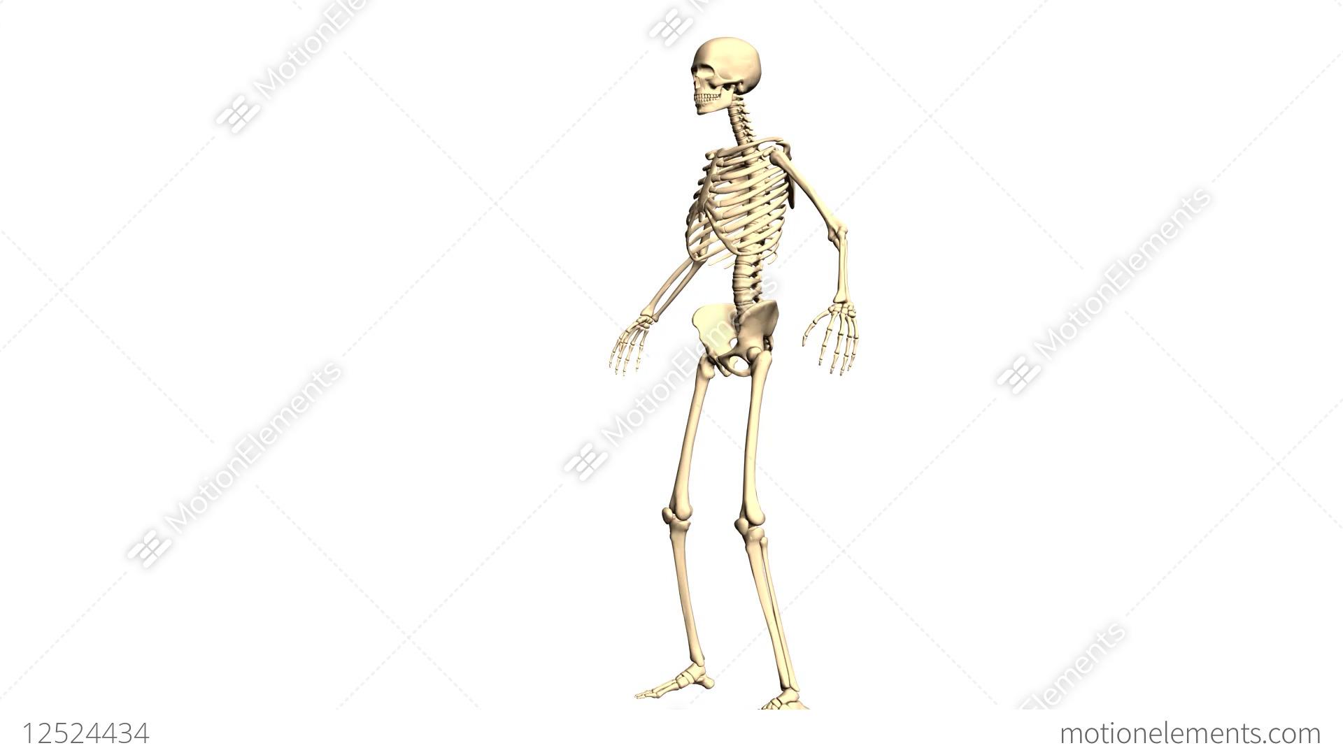 Animated 3d Anatomy Skeleton 3d Animation Time Lapse 3d Animation