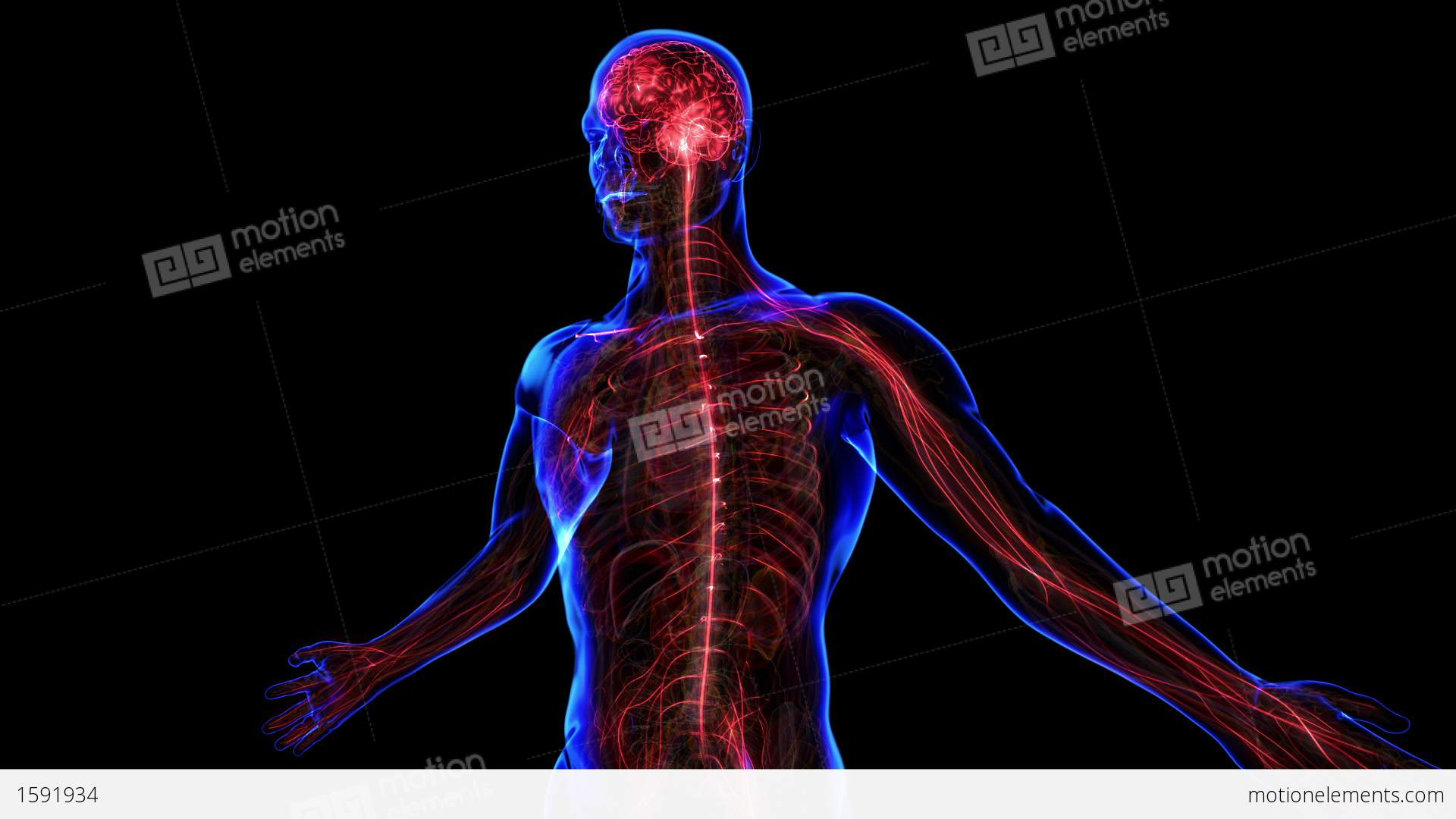 3d bone anatomy