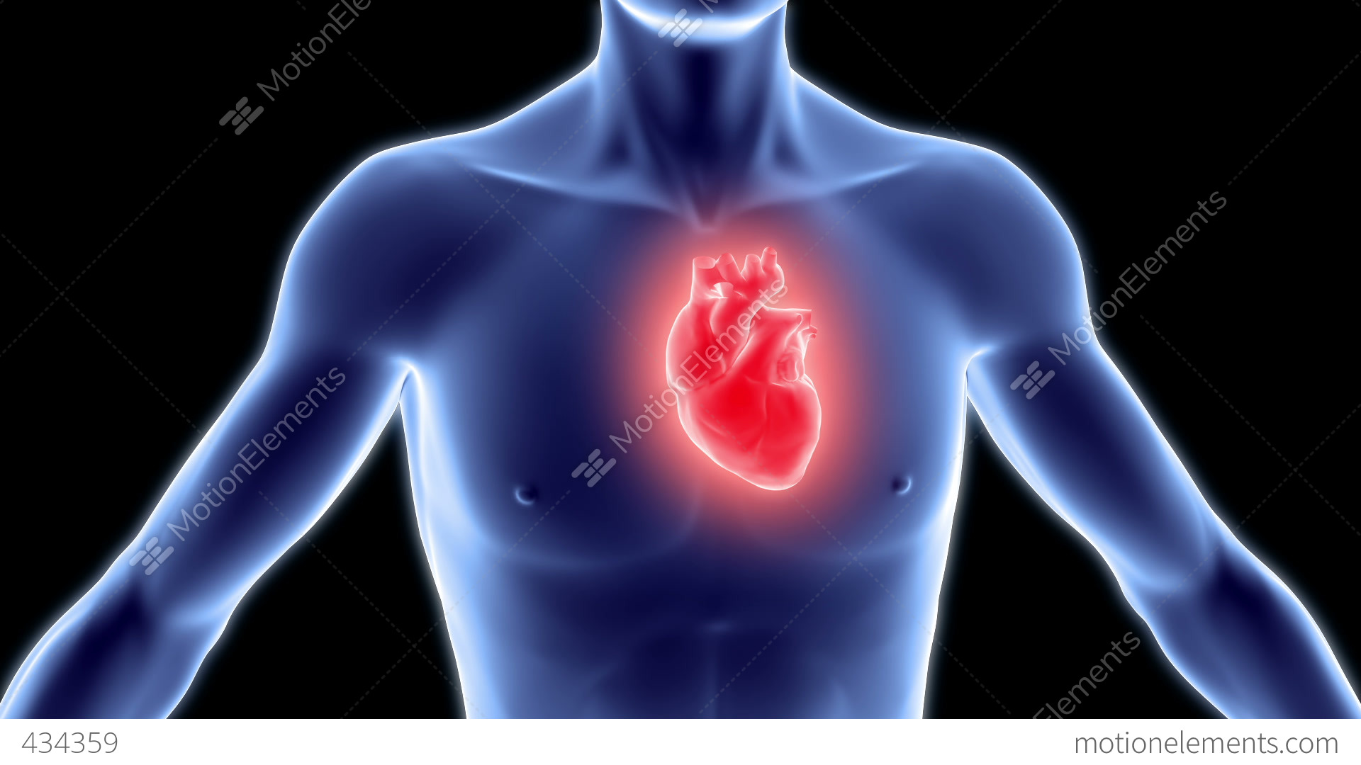 Human Body With Heart Stock Animation 434359