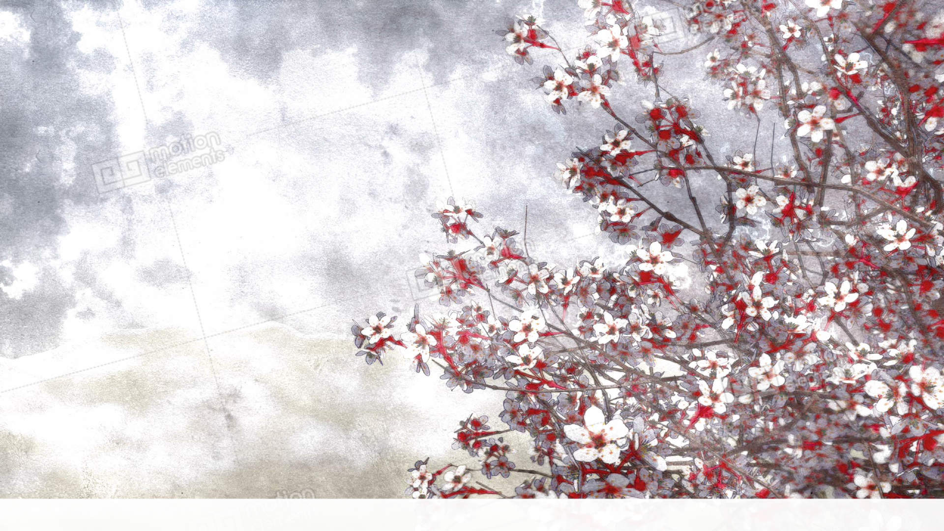 sakura cherry blossom watercolor background stock video footage