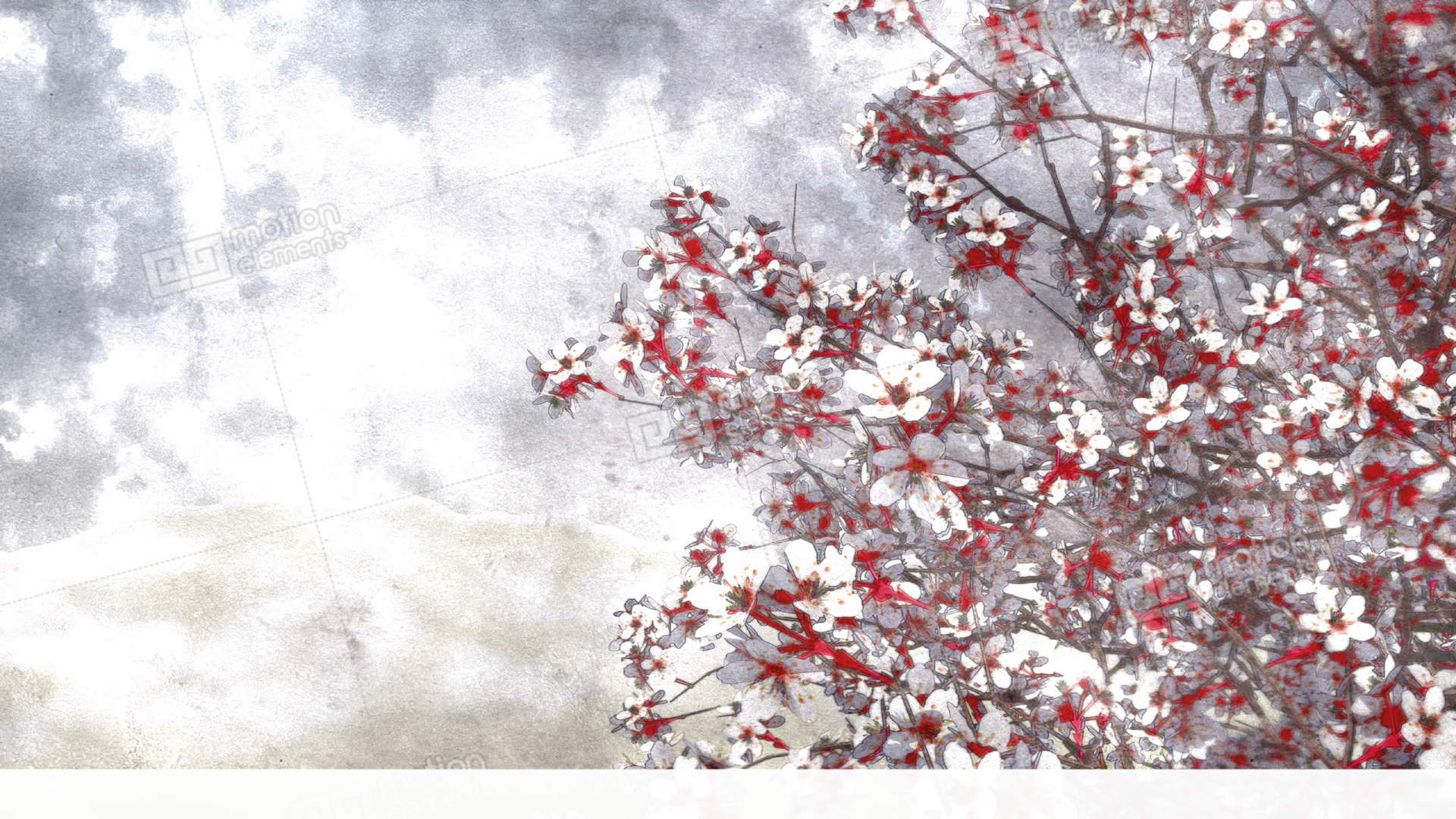 blooming sakura cherry watercolor art style stock video footage