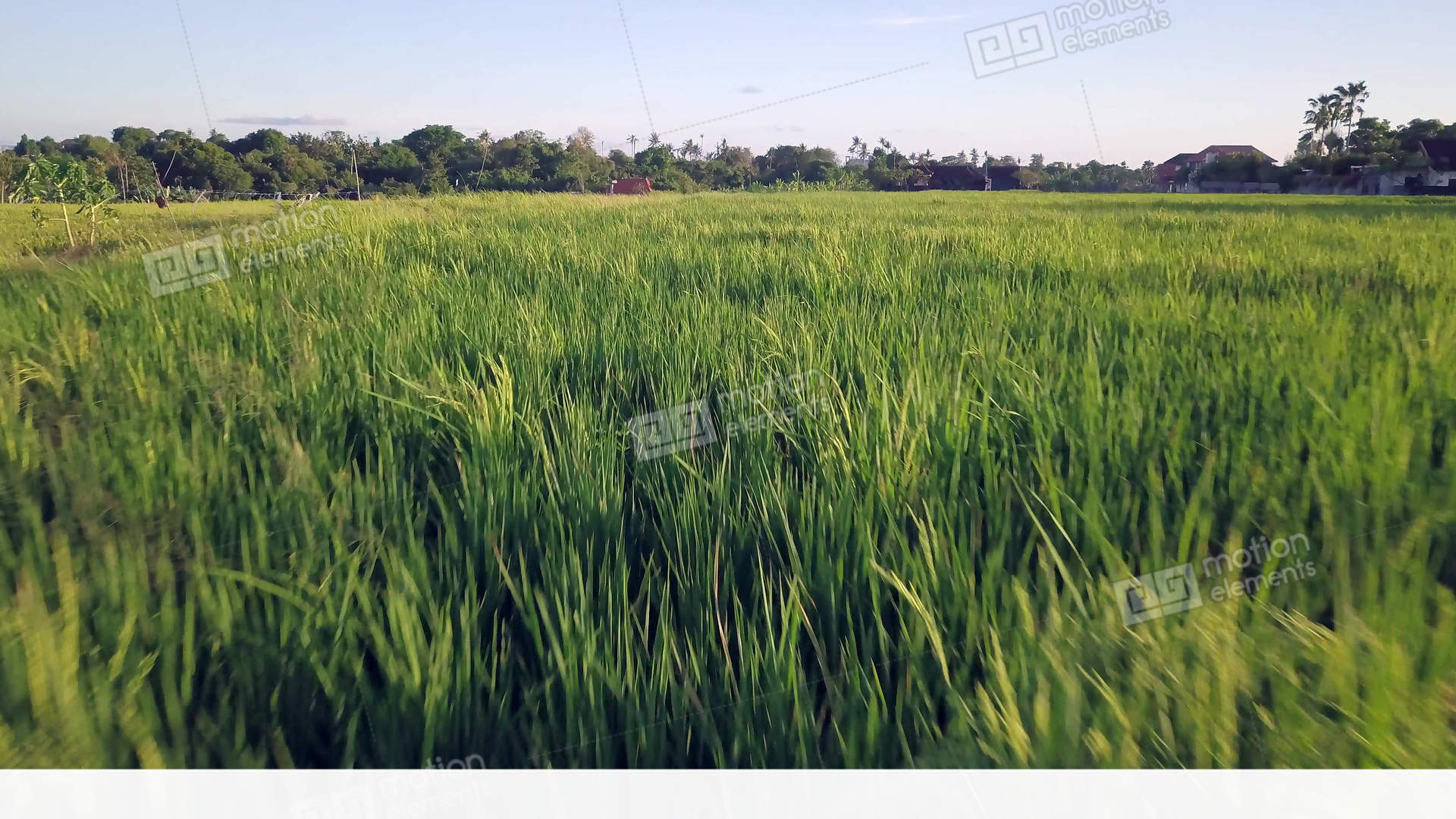 grass field aerial. Interesting Aerial Aerial Shot With Dron Flying Above Amazing Beautiful Stock Video Footage For Grass Field