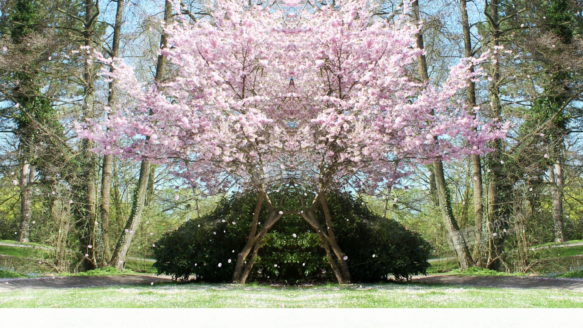 Sakura Bilder