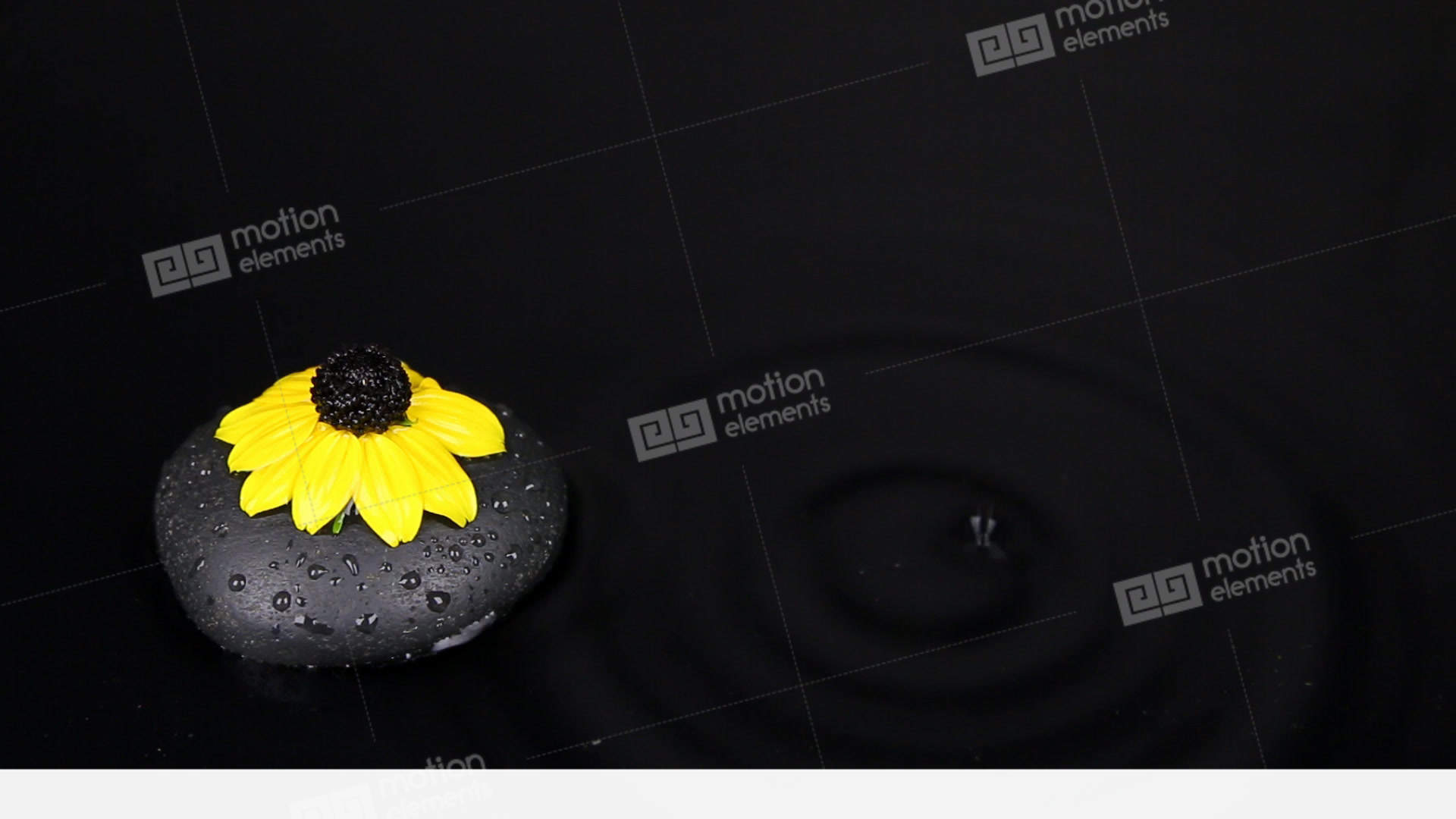 Falling Drops Into Water With Black Stone And Yellow Flower Splash