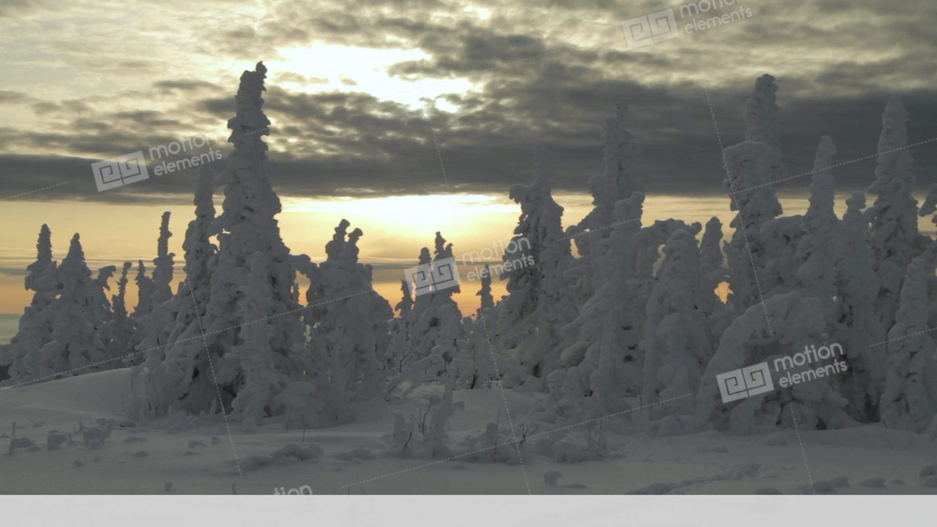 Christmas Trees Are Covered With Snow Beautiful Mountain Stock Video