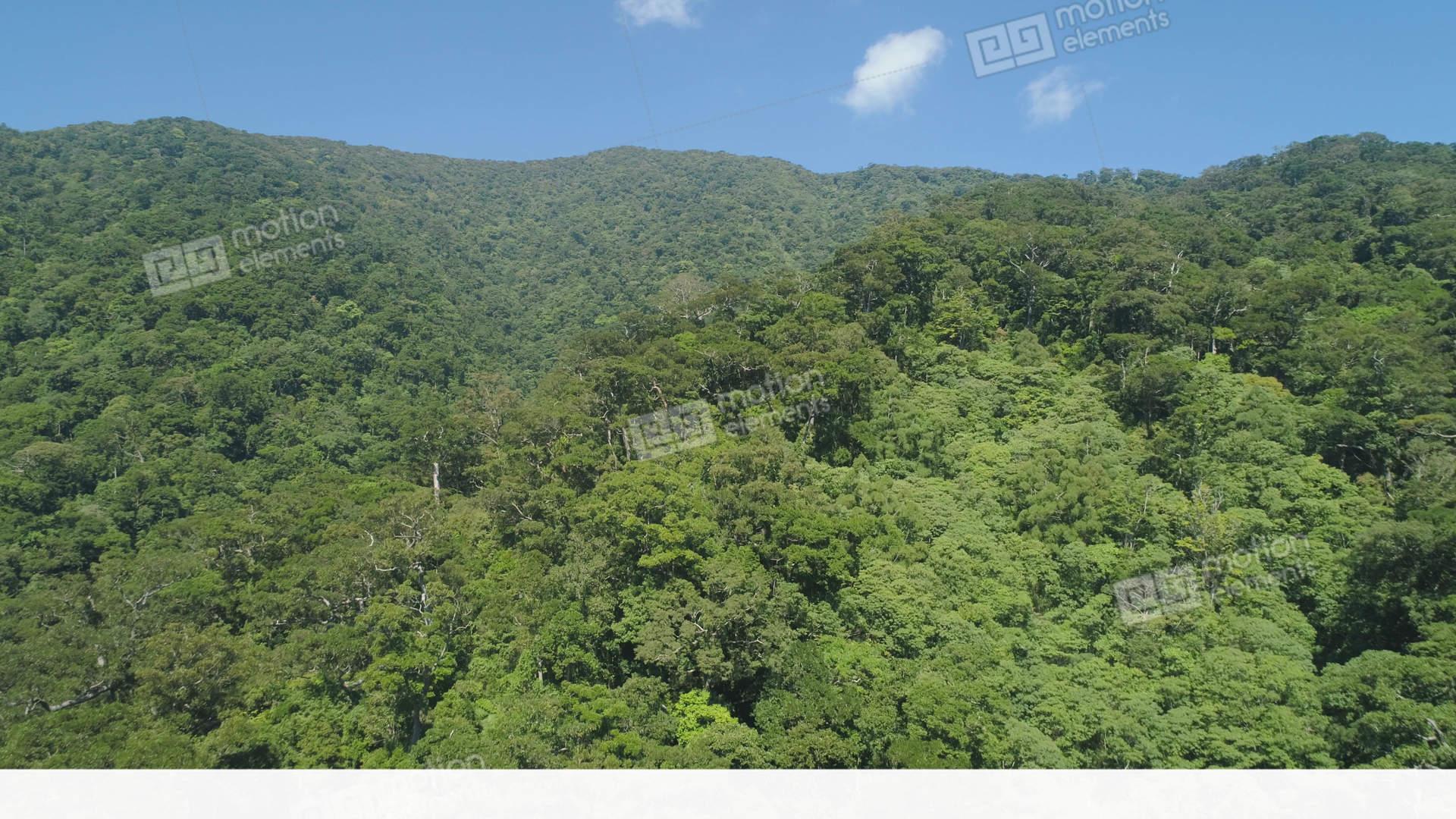 rainforest animal sound effects
