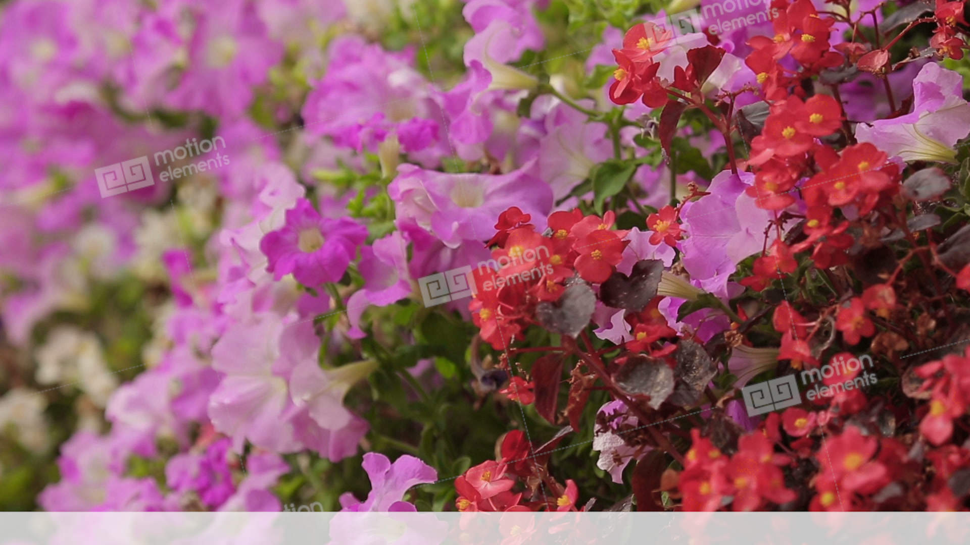 Different Types And Colors Of Flowers On Floral Wall, Stock
